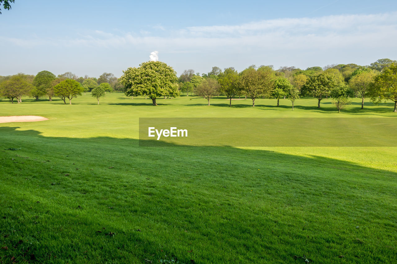plant, green color, grass, tree, beauty in nature, golf, growth, sky, sport, nature, golf course, activity, scenics - nature, landscape, tranquility, no people, land, day, environment, tranquil scene, green - golf course, outdoors, clean