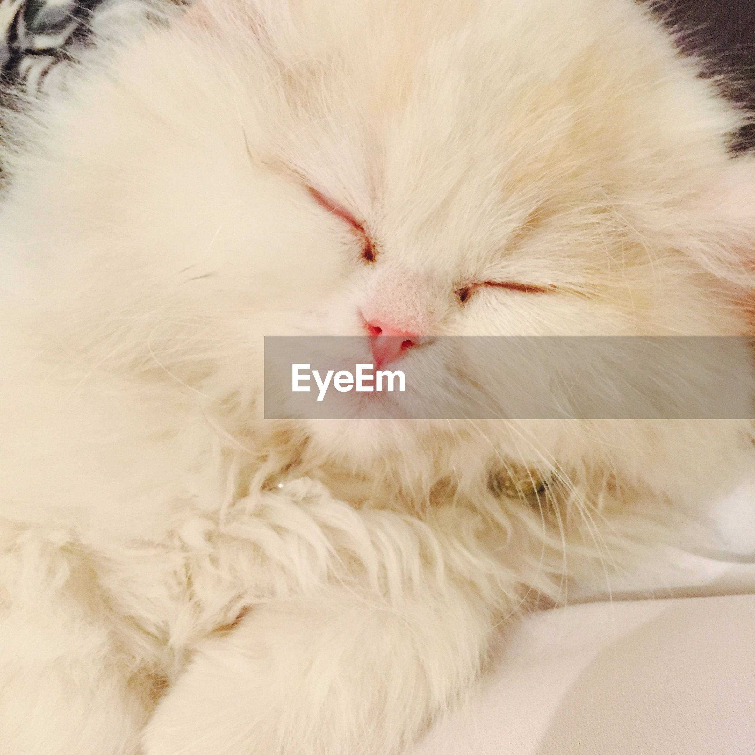 domestic cat, cat, pets, domestic animals, feline, animal themes, mammal, one animal, indoors, whisker, relaxation, white color, sleeping, close-up, resting, eyes closed, lying down, animal head, no people, high angle view