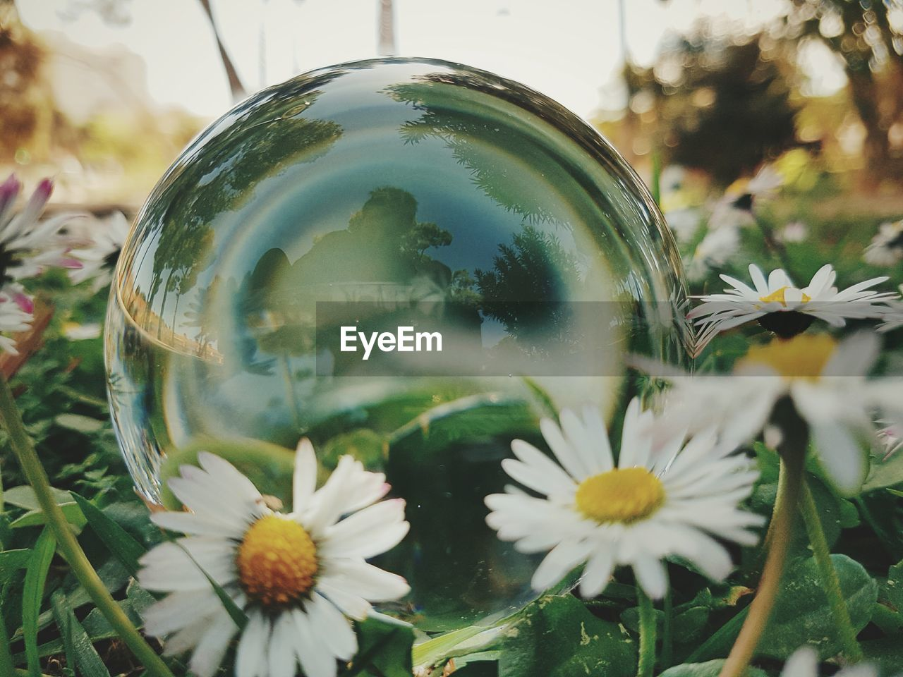 Reflection of person in crystal ball on field by flowers
