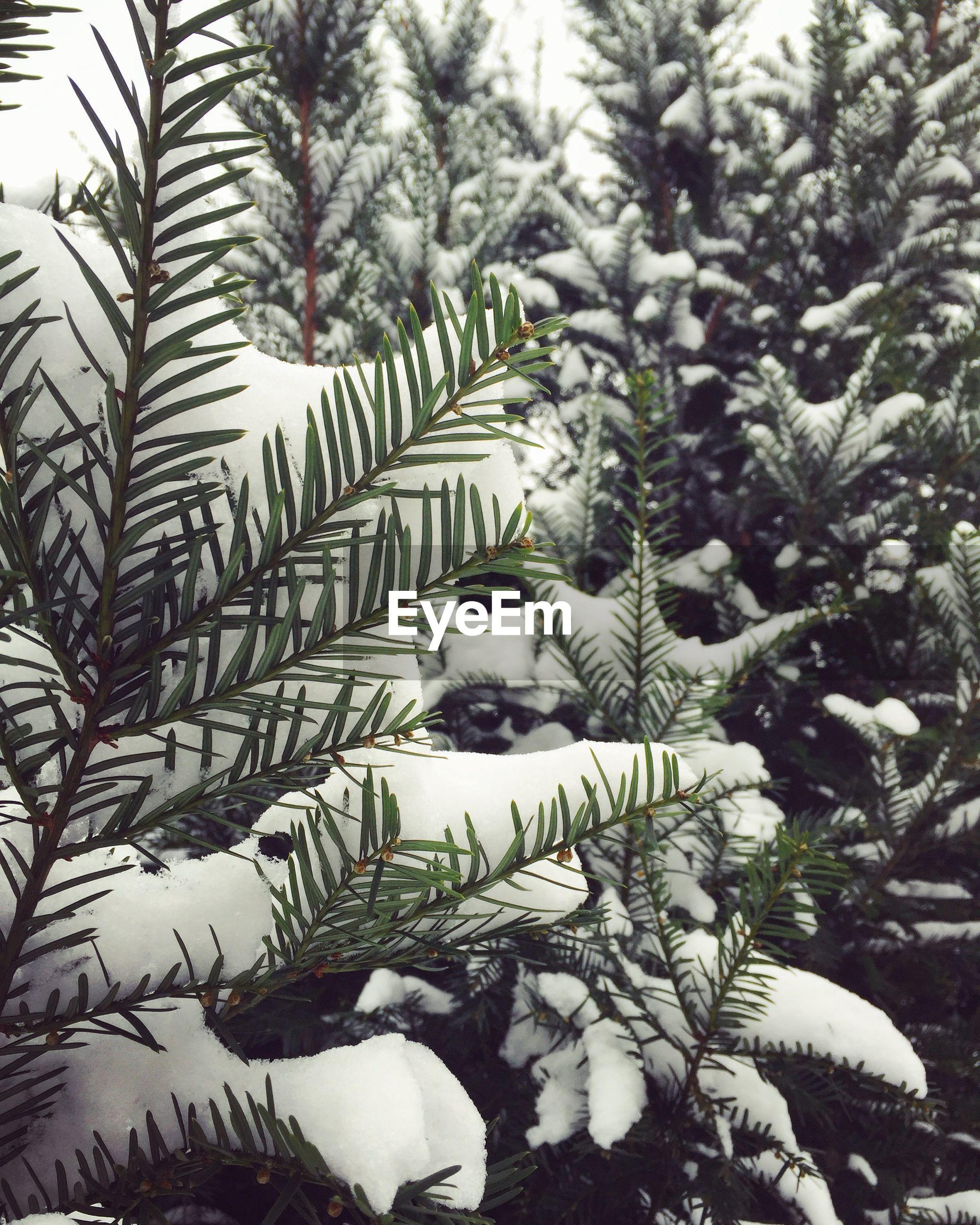 Frozen plants during winter