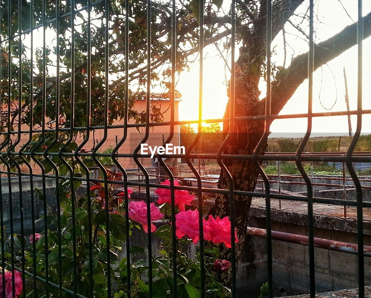 sunset, sunlight, railing, sun, tree, growth, protection, sky, nature, no people, beauty in nature, outdoors, day, water