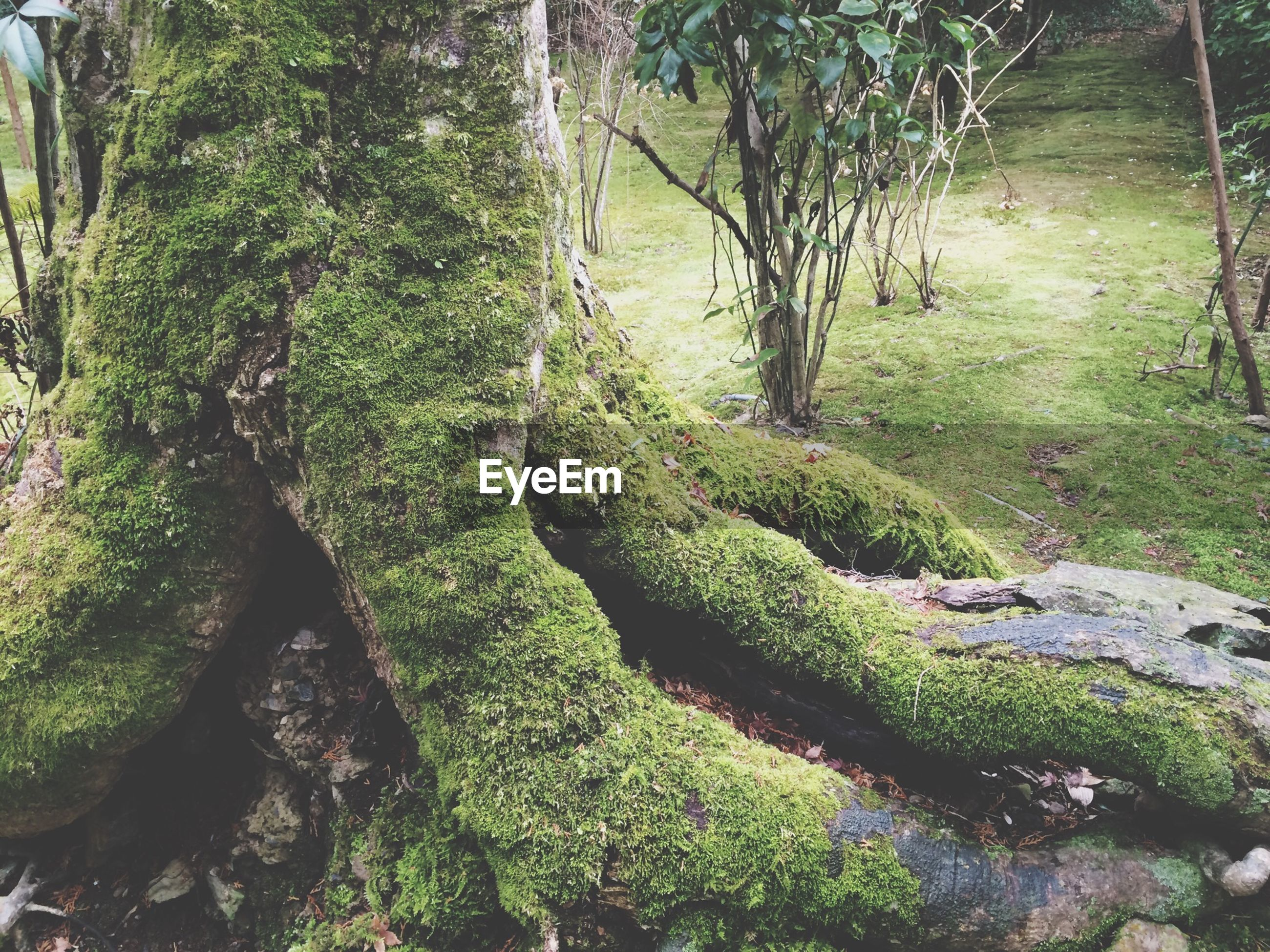 tree, green color, moss, growth, forest, nature, tranquility, tree trunk, plant, beauty in nature, rock - object, tranquil scene, outdoors, day, scenics, sunlight, no people, textured, high angle view, green