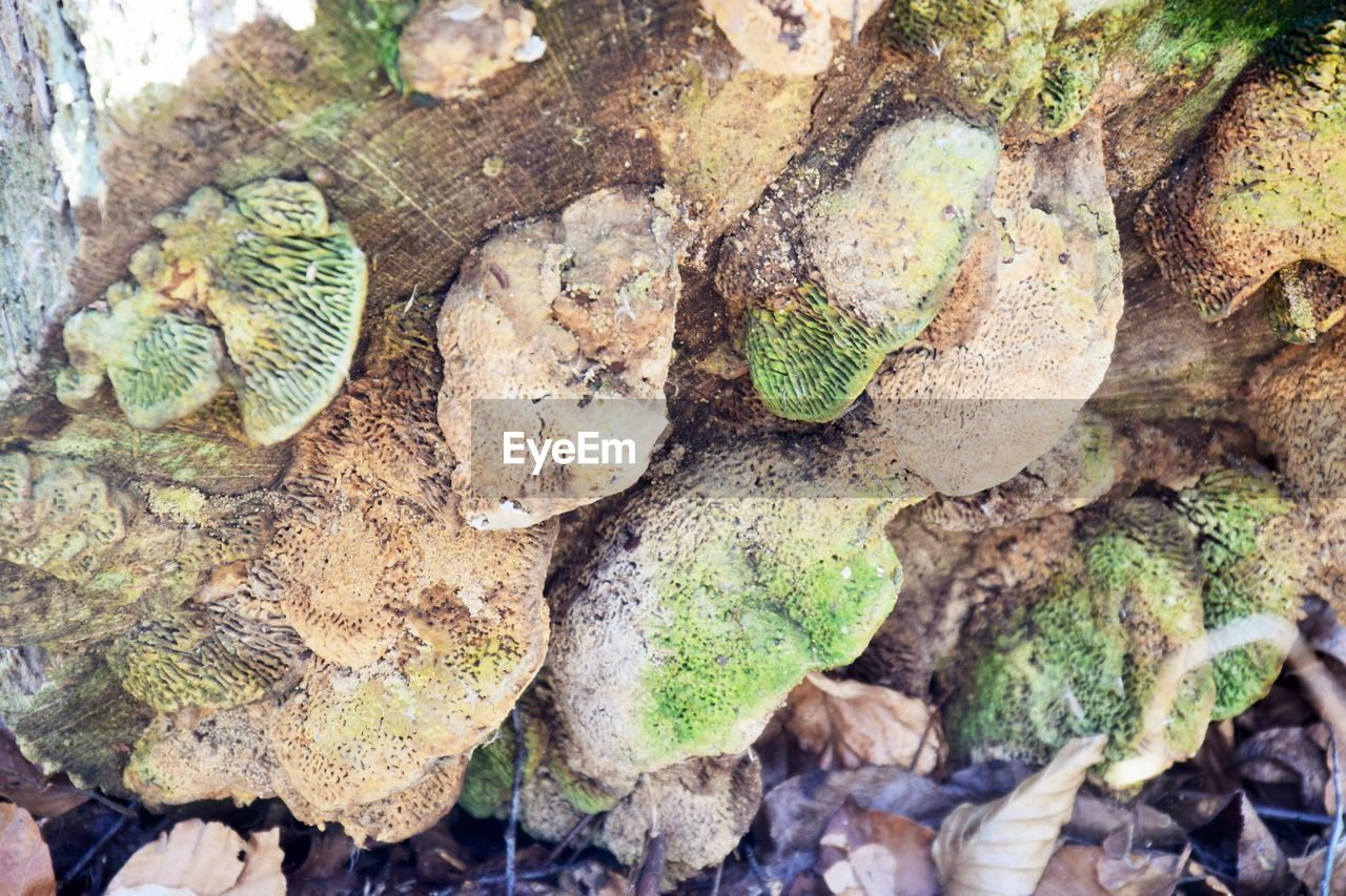 nature, no people, tree, day, close-up, textured, plant, full frame, backgrounds, plant part, leaf, outdoors, land, growth, wood - material, directly above, high angle view, moss, large group of objects, rock, leaves