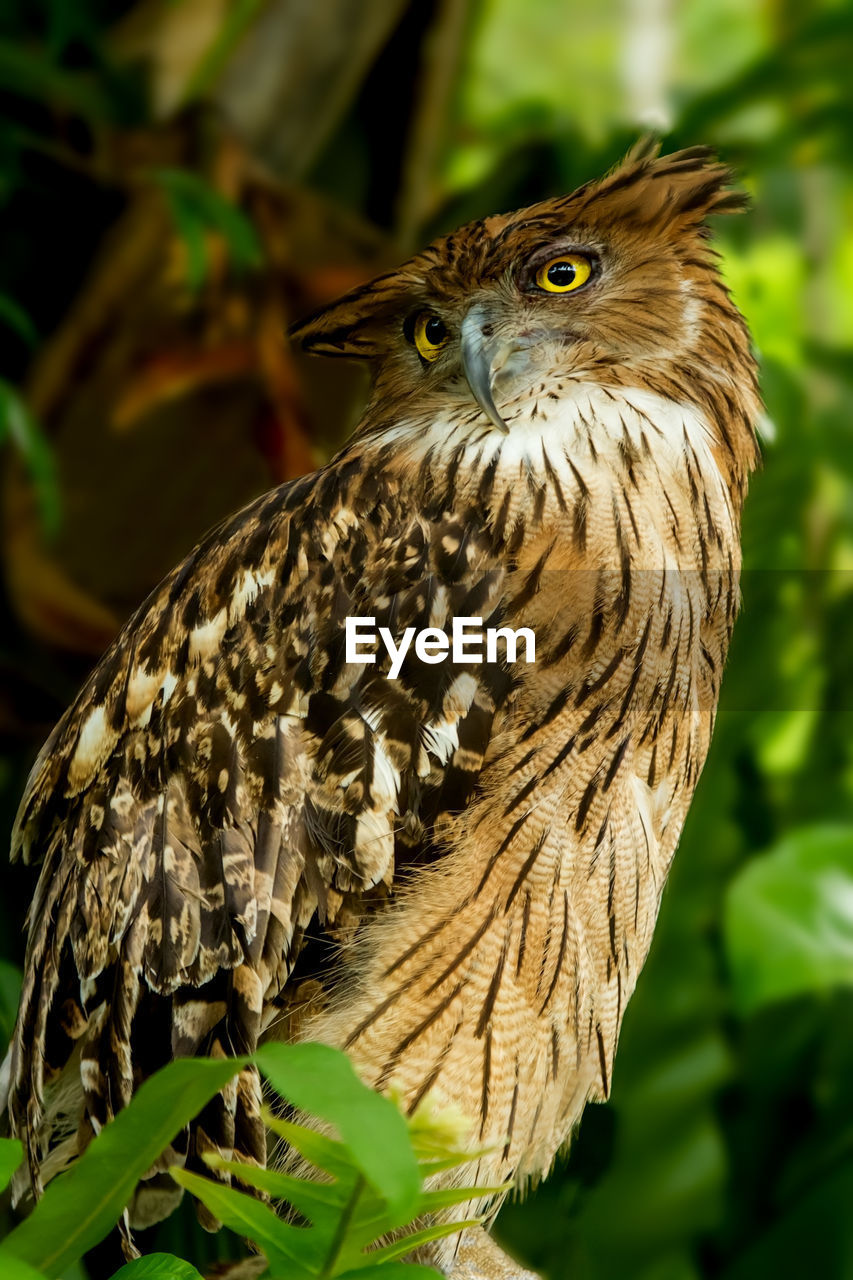 animal themes, animal, one animal, animals in the wild, bird, vertebrate, animal wildlife, bird of prey, focus on foreground, close-up, plant, tree, no people, nature, day, owl, perching, portrait, outdoors, branch, animal head, animal eye, eagle, yellow eyes