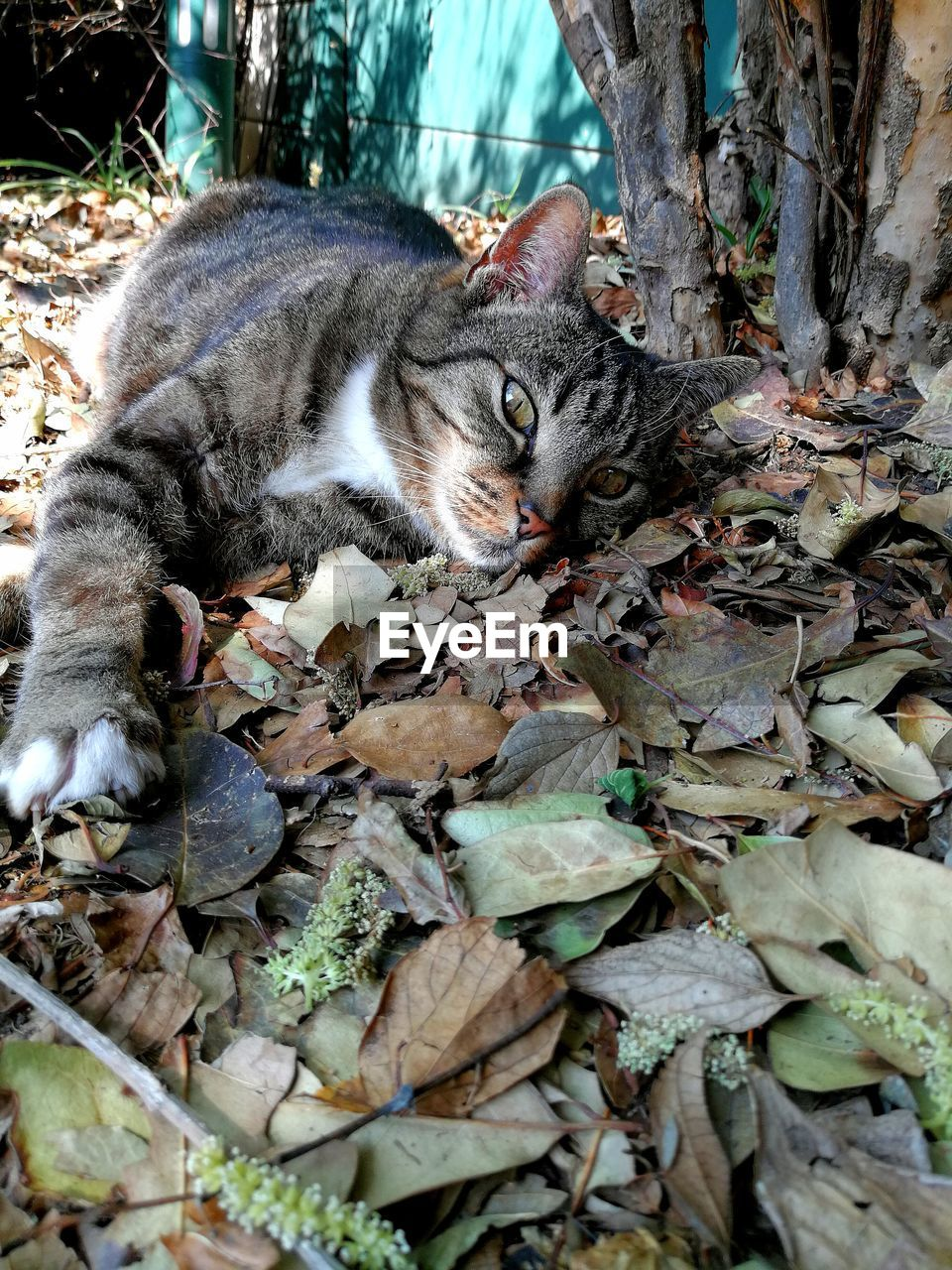 cat, domestic cat, feline, animal themes, mammal, domestic, pets, domestic animals, animal, plant part, one animal, leaf, vertebrate, no people, nature, relaxation, day, dry, portrait, looking at camera, whisker, leaves, animal head, tabby