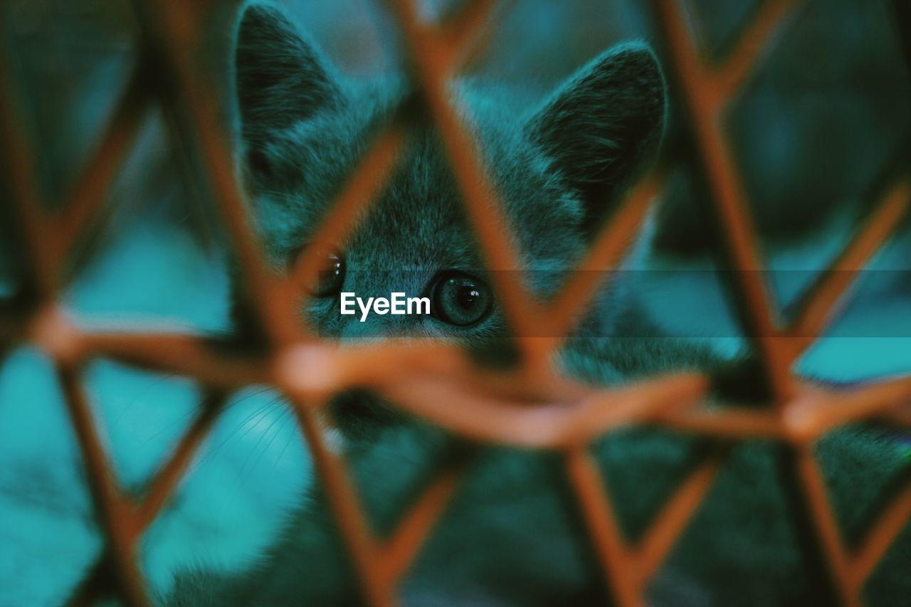 Portrait Of Kitten Seen Through Fence