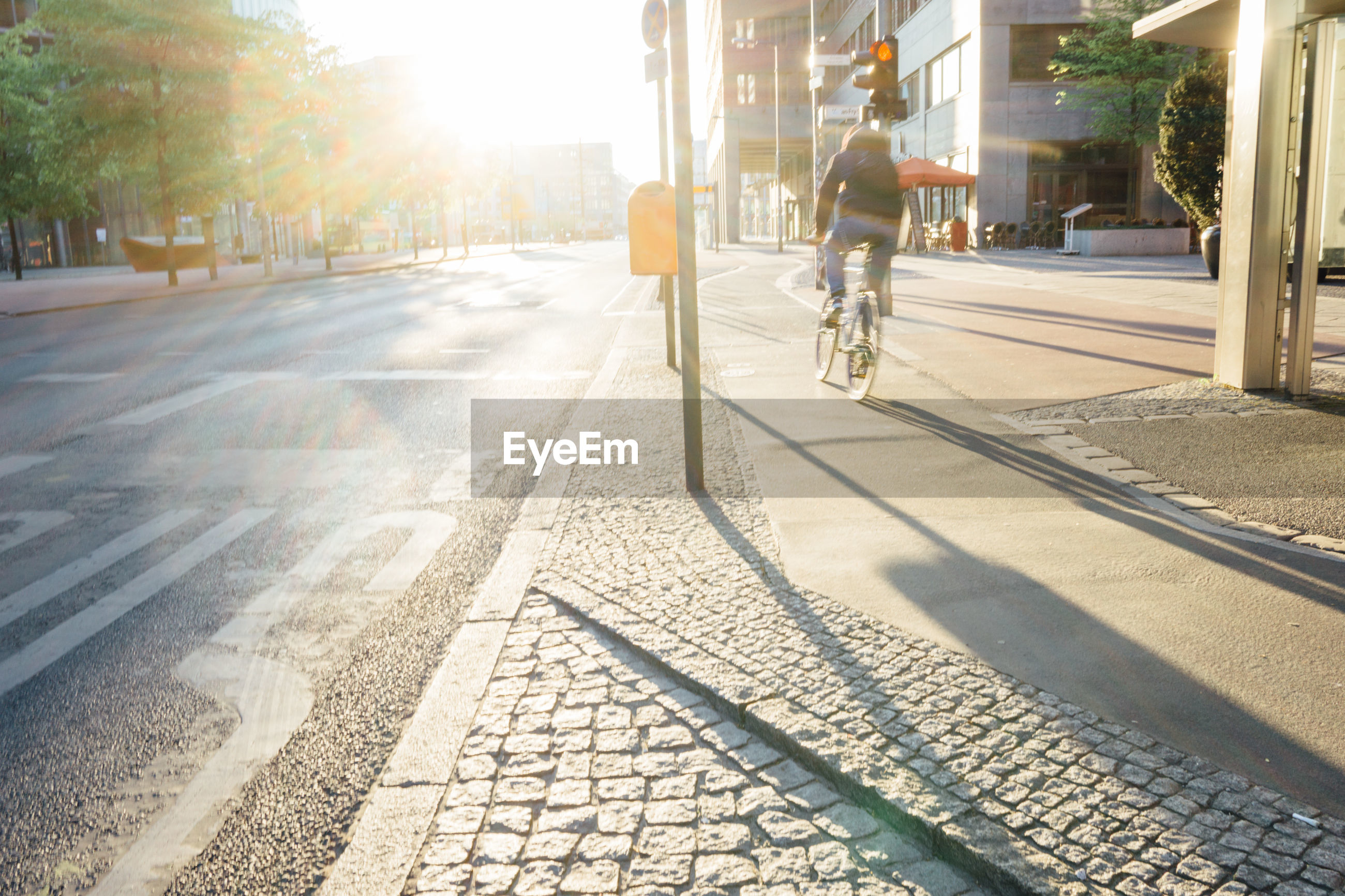 Rear view of man riding bicycle on sidewalk during sunny day
