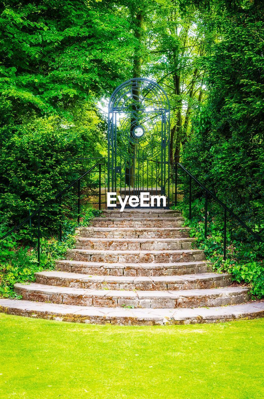 steps, green color, tree, growth, the way forward, staircase, steps and staircases, nature, park - man made space, day, outdoors, no people, beauty in nature, grass
