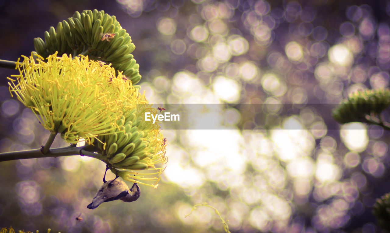flower, plant, flowering plant, growth, beauty in nature, freshness, vulnerability, fragility, focus on foreground, close-up, petal, no people, flower head, nature, day, inflorescence, outdoors, yellow, bud, botany