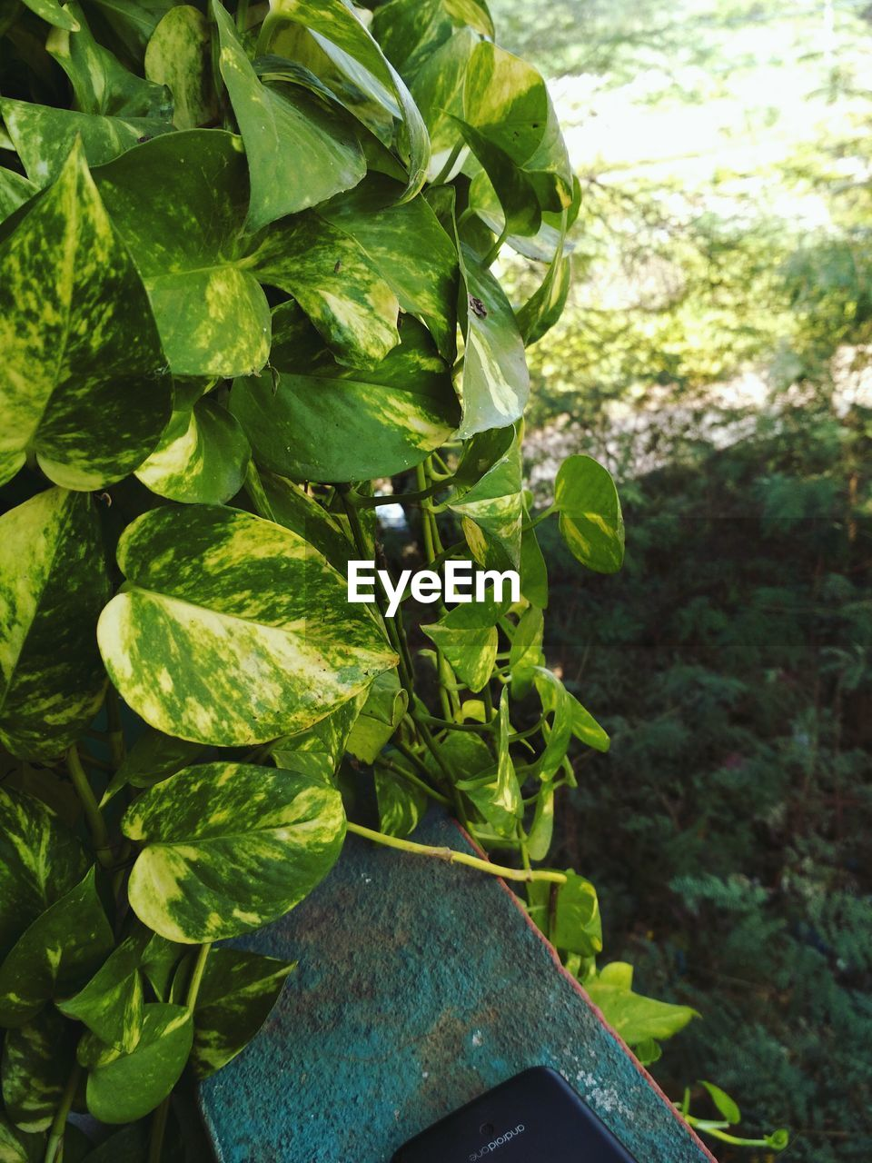 growth, leaf, plant, green color, nature, close-up, no people, outdoors, day, beauty in nature, freshness