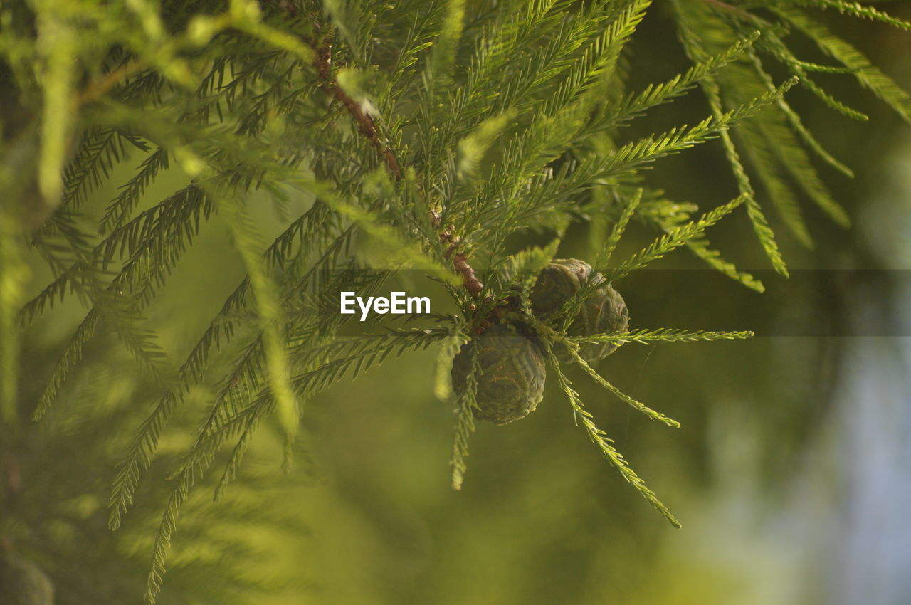 plant, close-up, growth, leaf, nature, no people, green color, plant part, selective focus, beauty in nature, arachnid, day, spider, animal, one animal, focus on foreground, outdoors, animals in the wild, animal wildlife, animal themes