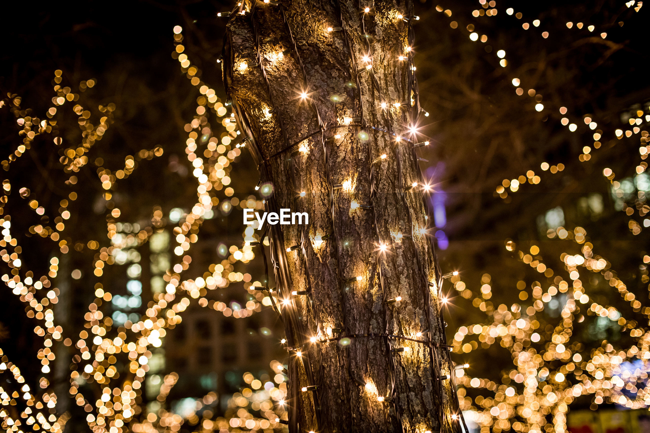 Low angle view of illuminated tree