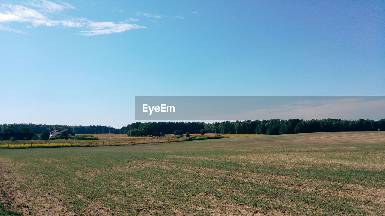 field, landscape, nature, agriculture, tranquility, beauty in nature, scenics, tree, no people, tranquil scene, growth, day, grass, rural scene, outdoors, sky, clear sky