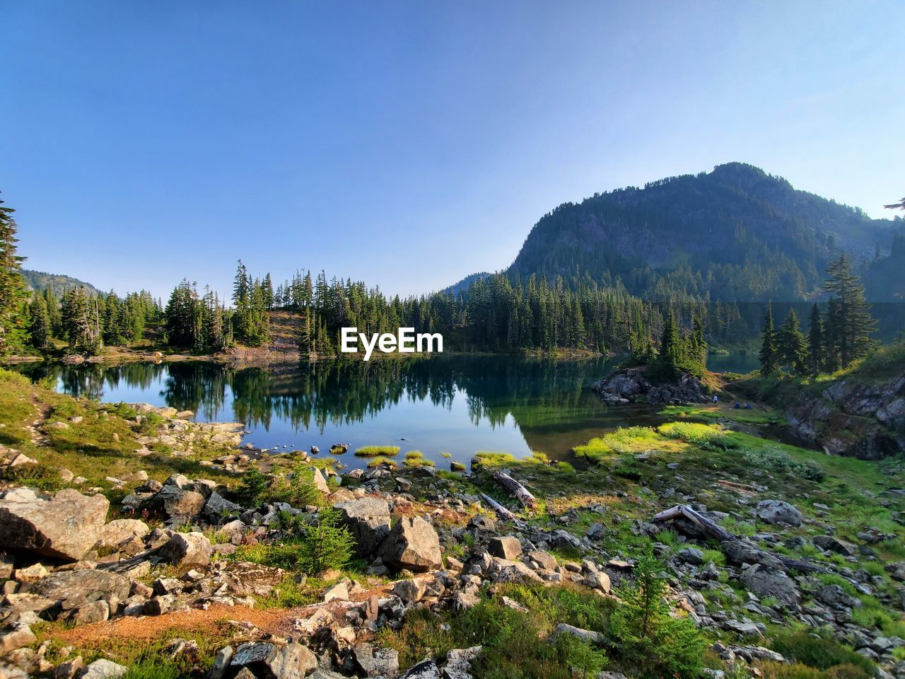 SCENIC VIEW OF LAKE AMIDST TREES AGAINST CLEAR SKY