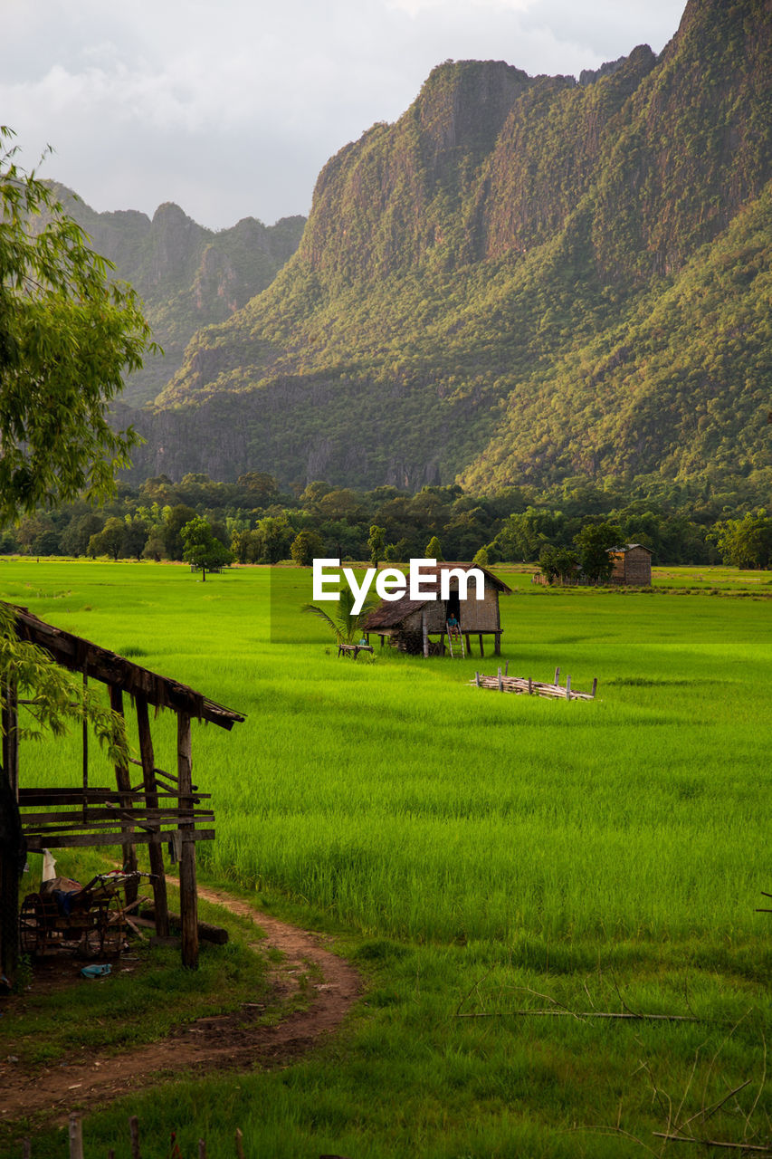 mountain, beauty in nature, field, scenics, tranquility, agriculture, nature, tranquil scene, mountain range, landscape, green color, farm, outdoors, grass, no people, day, rice paddy, idyllic, growth, rural scene, sky, rice - cereal plant, terraced field, tree, water