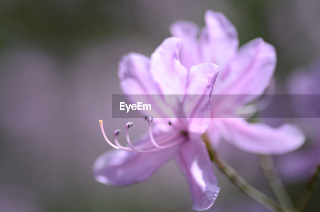 flowering plant, plant, flower, fragility, vulnerability, beauty in nature, petal, growth, close-up, freshness, focus on foreground, no people, inflorescence, day, selective focus, nature, purple, flower head, pink color, outdoors, pollen