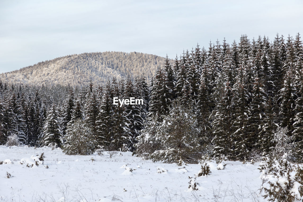 VIEW OF SNOW COVERED LAND