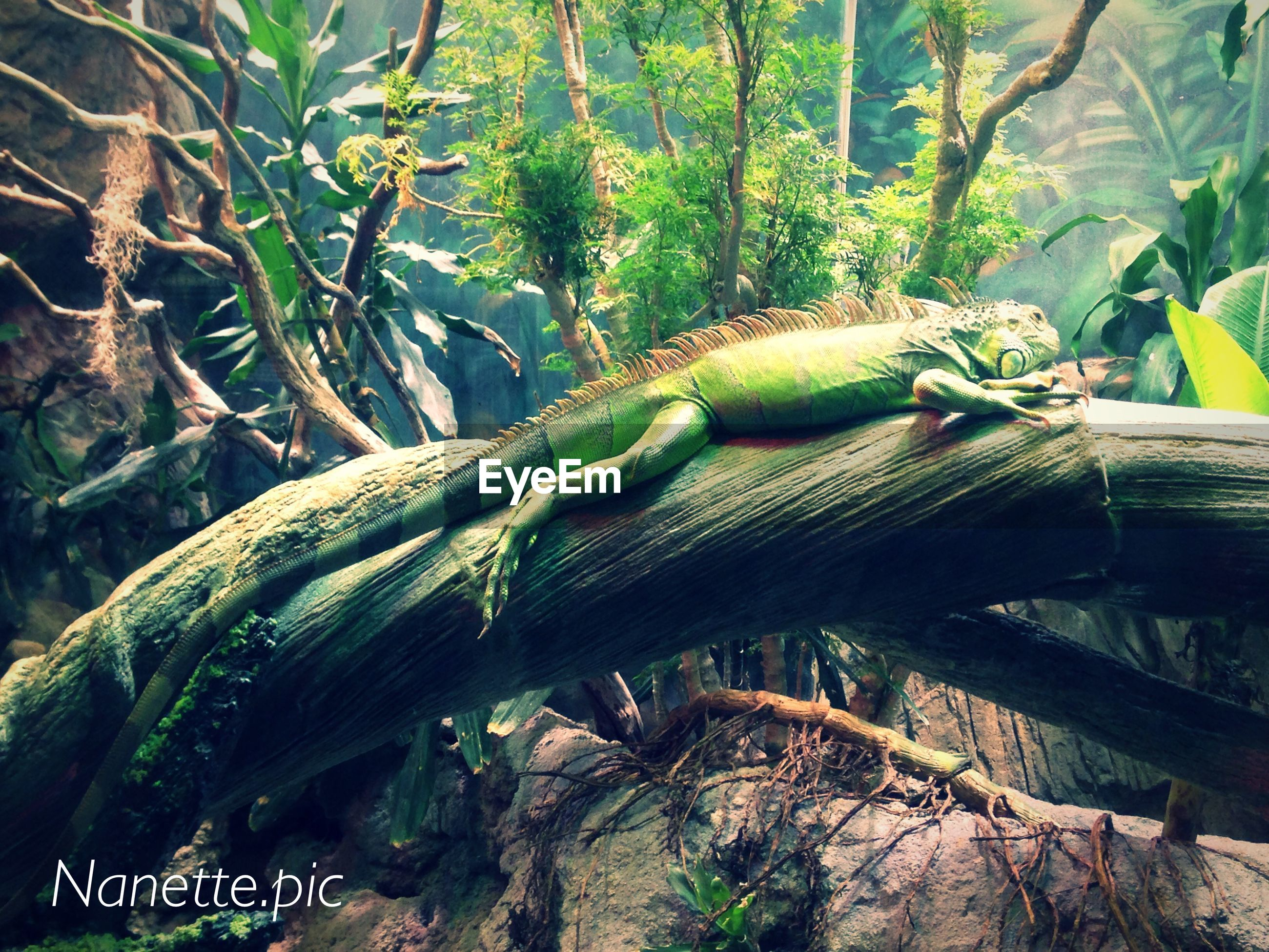 tree, green color, nature, water, forest, branch, growth, tree trunk, tranquility, day, plant, outdoors, beauty in nature, log, reptile, no people, high angle view, animals in the wild, tranquil scene, wood - material