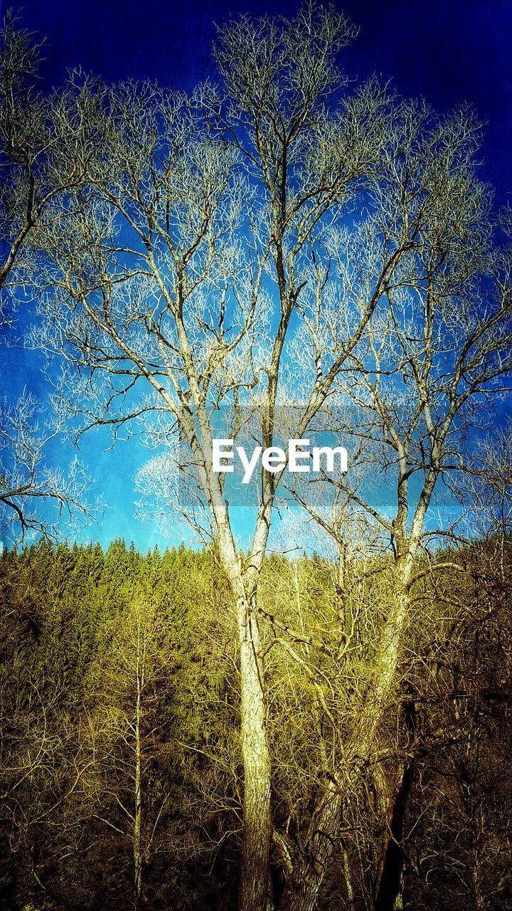 tree, nature, blue, branch, landscape, day, bare tree, forest, no people, beauty in nature, growth, sky, clear sky, outdoors