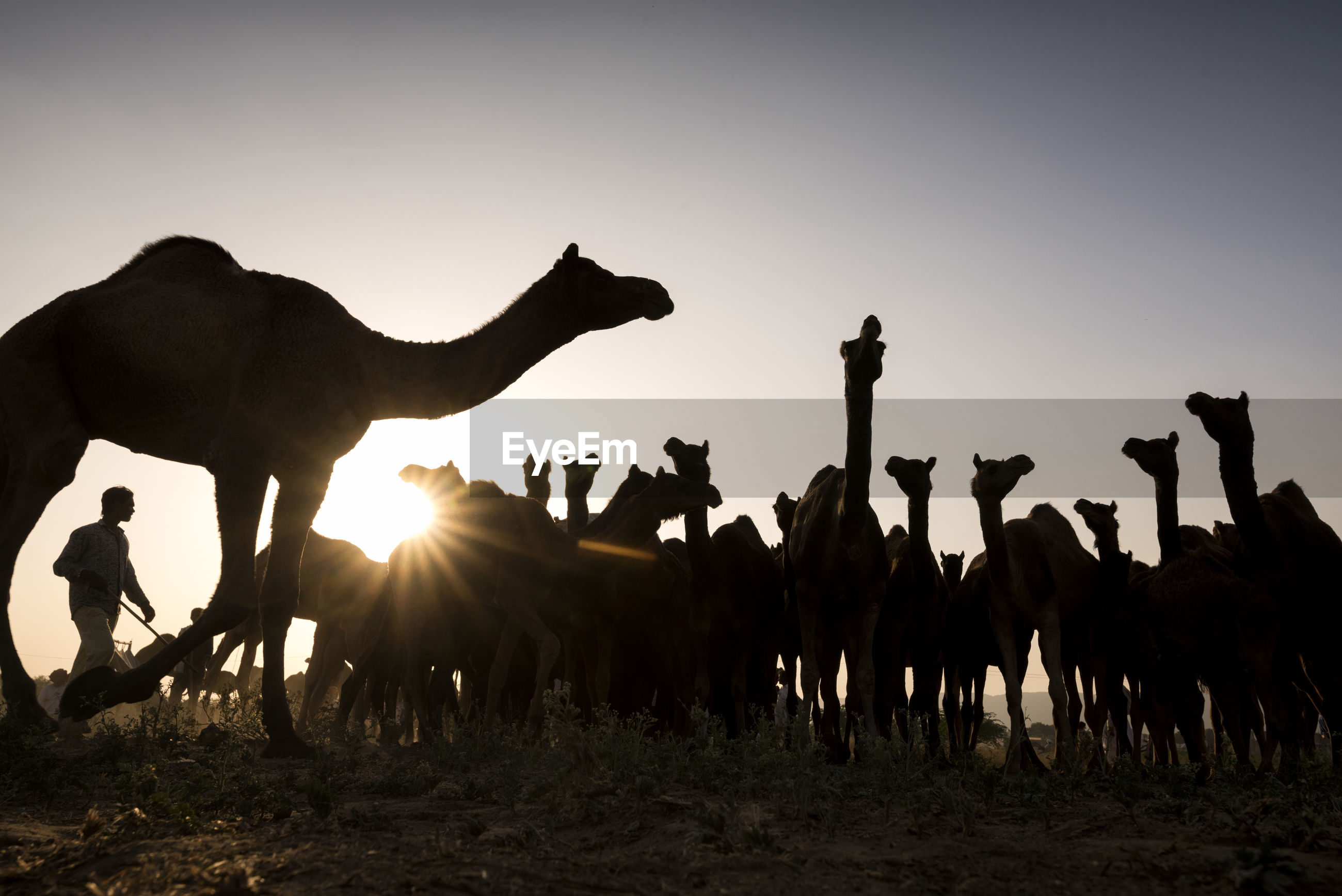 SILHOUETTE PEOPLE IN DESERT AGAINST SKY