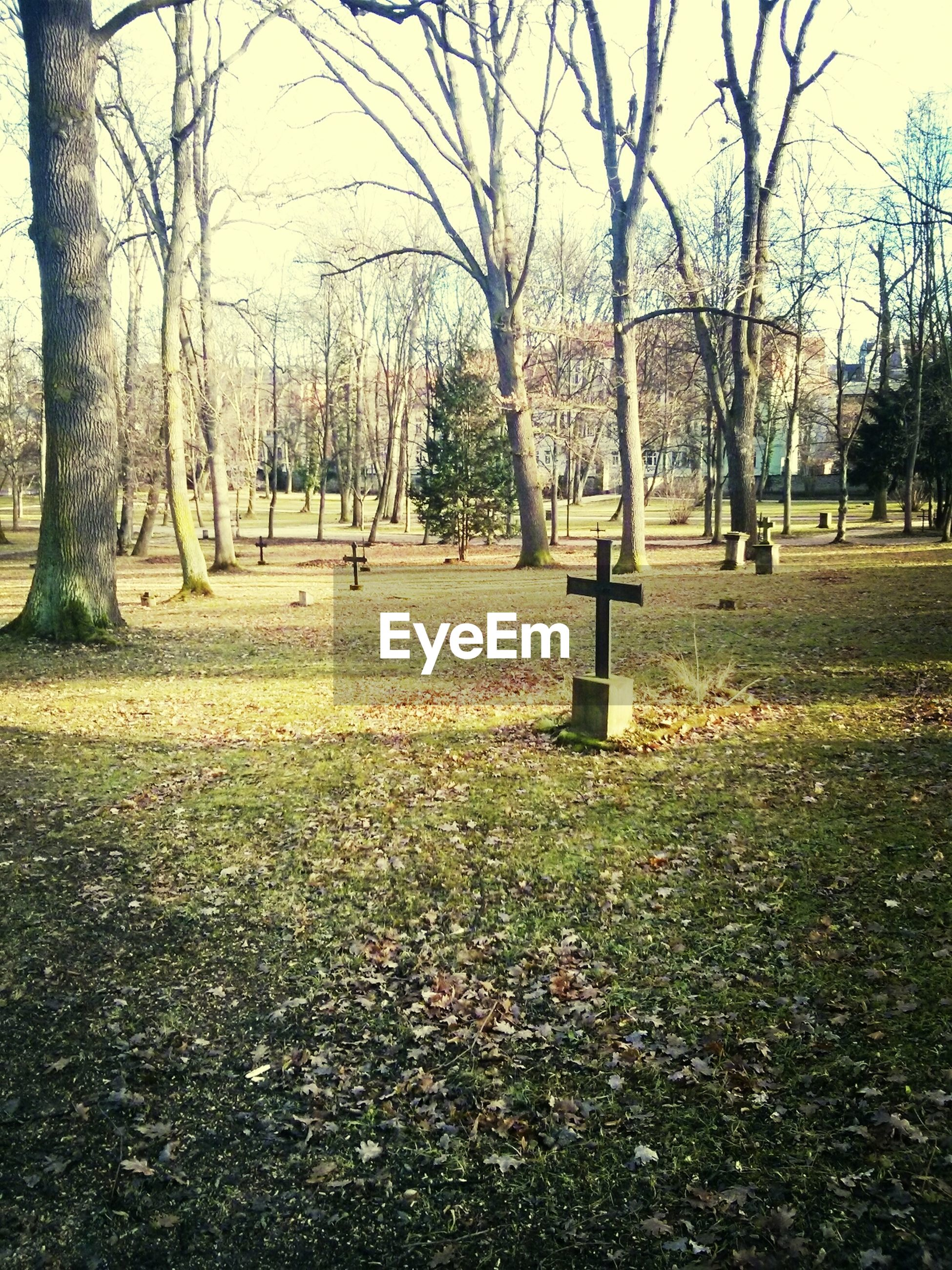 tree, bare tree, tree trunk, branch, grass, autumn, park - man made space, tranquility, nature, park, growth, tranquil scene, change, day, beauty in nature, outdoors, fallen, scenics, field, landscape