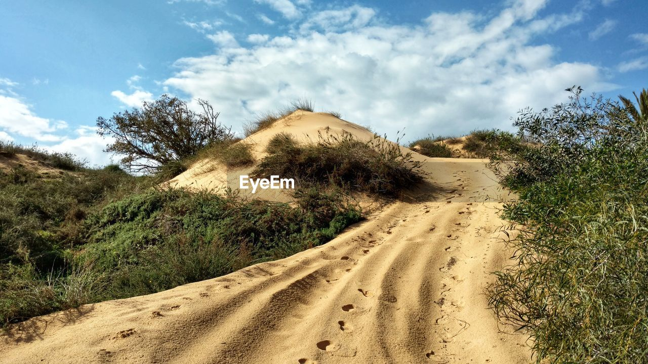 sky, cloud - sky, land, sand, plant, scenics - nature, nature, tranquil scene, beauty in nature, non-urban scene, tranquility, tree, day, landscape, environment, dirt road, no people, sunlight, road, desert, outdoors, arid climate, climate