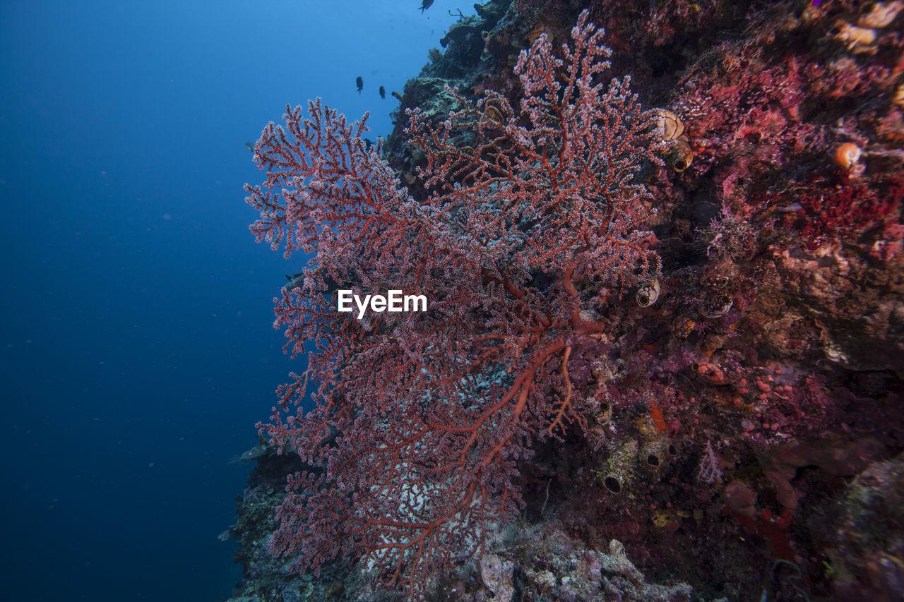 Close-up of seaweed underwater