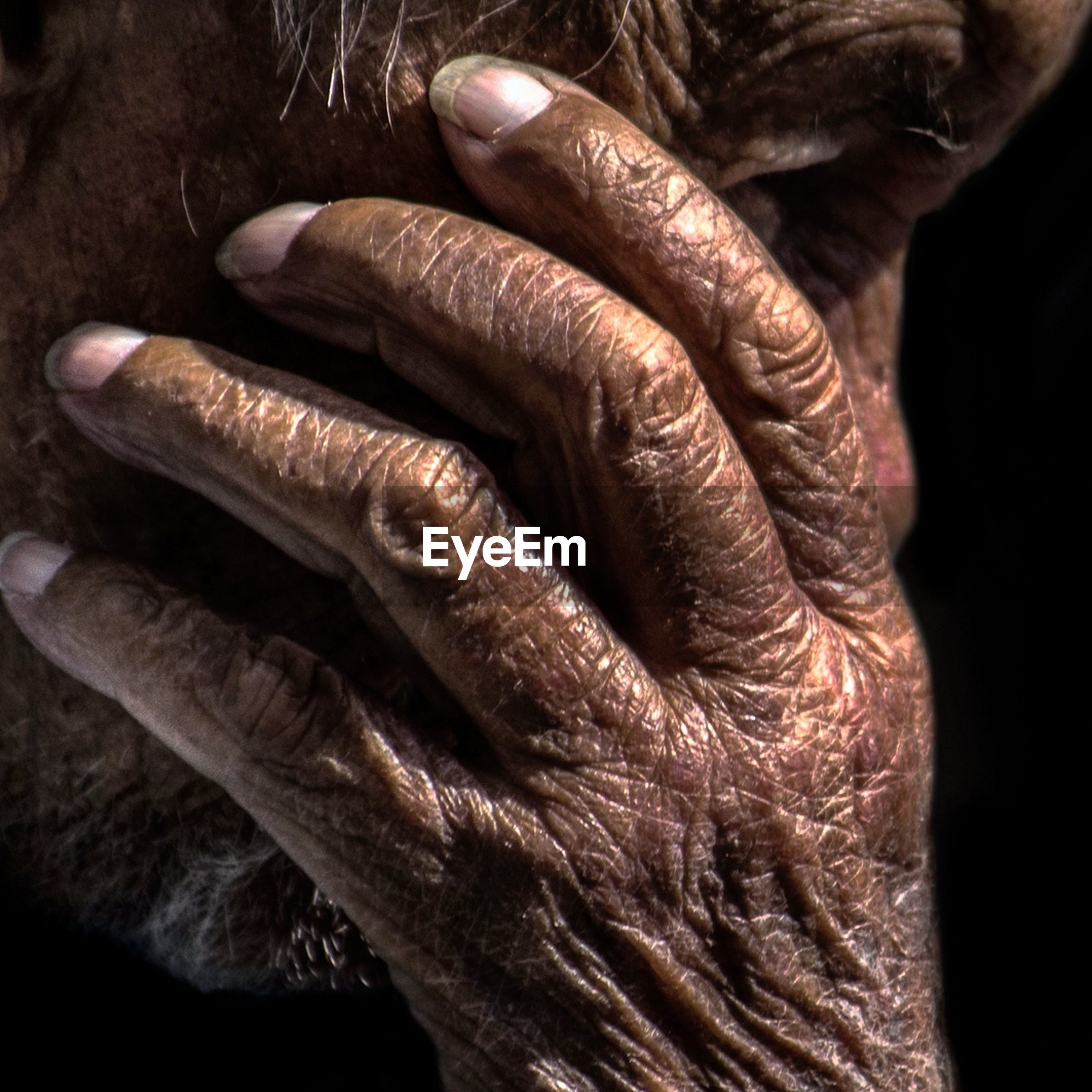 close-up, human hand, black background, studio shot, human body part, one person, indoors, day, people
