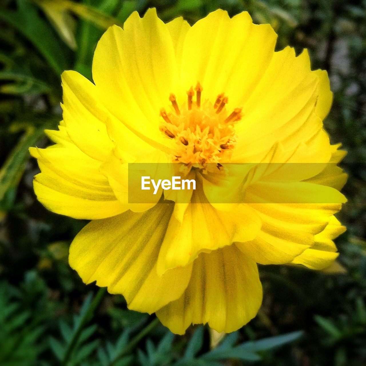 flower, yellow, petal, nature, growth, fragility, flower head, beauty in nature, plant, freshness, blooming, pollen, no people, outdoors, close-up, exoticism, day