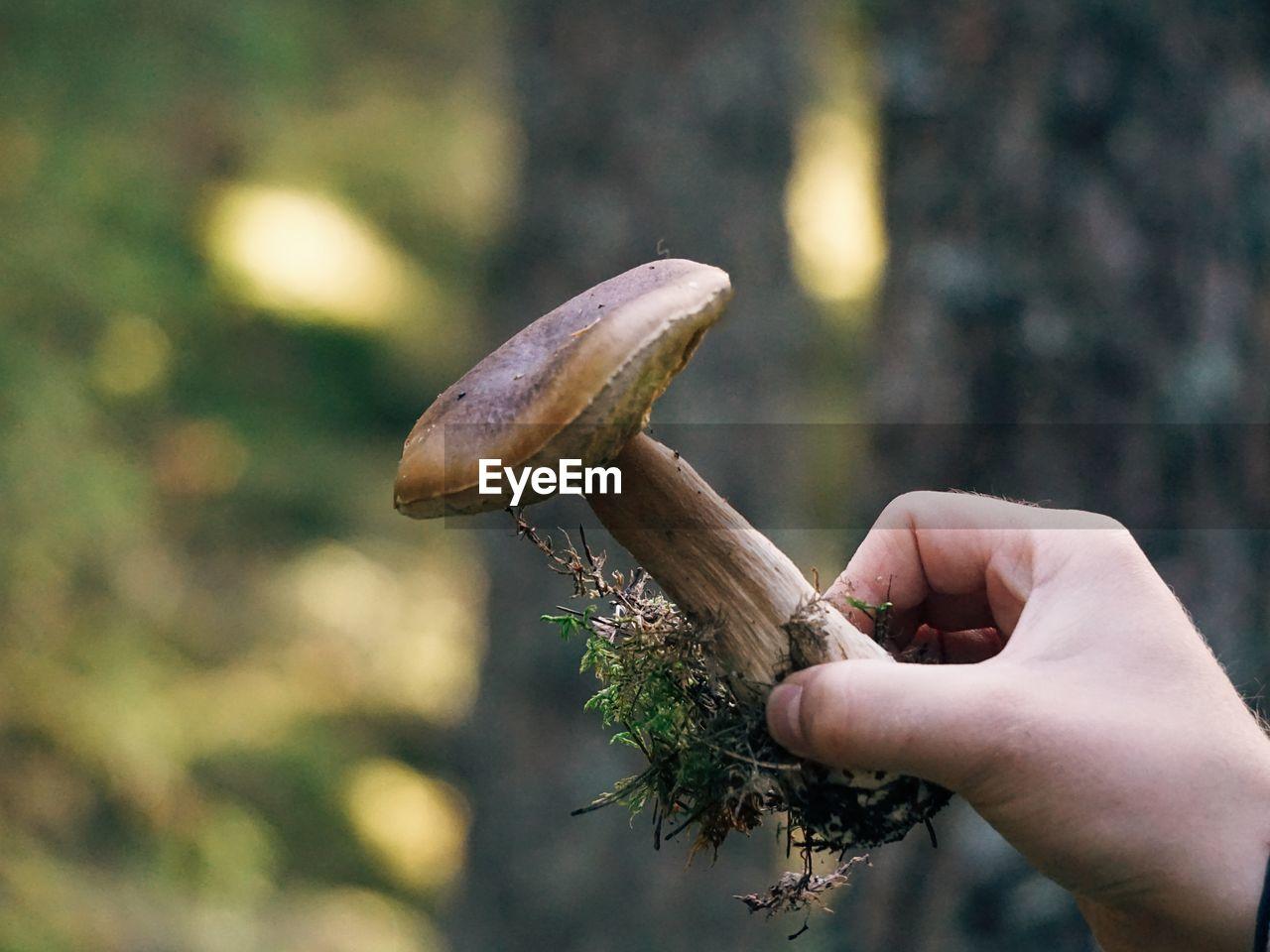 Cropped Hand Holding Edible Mushroom