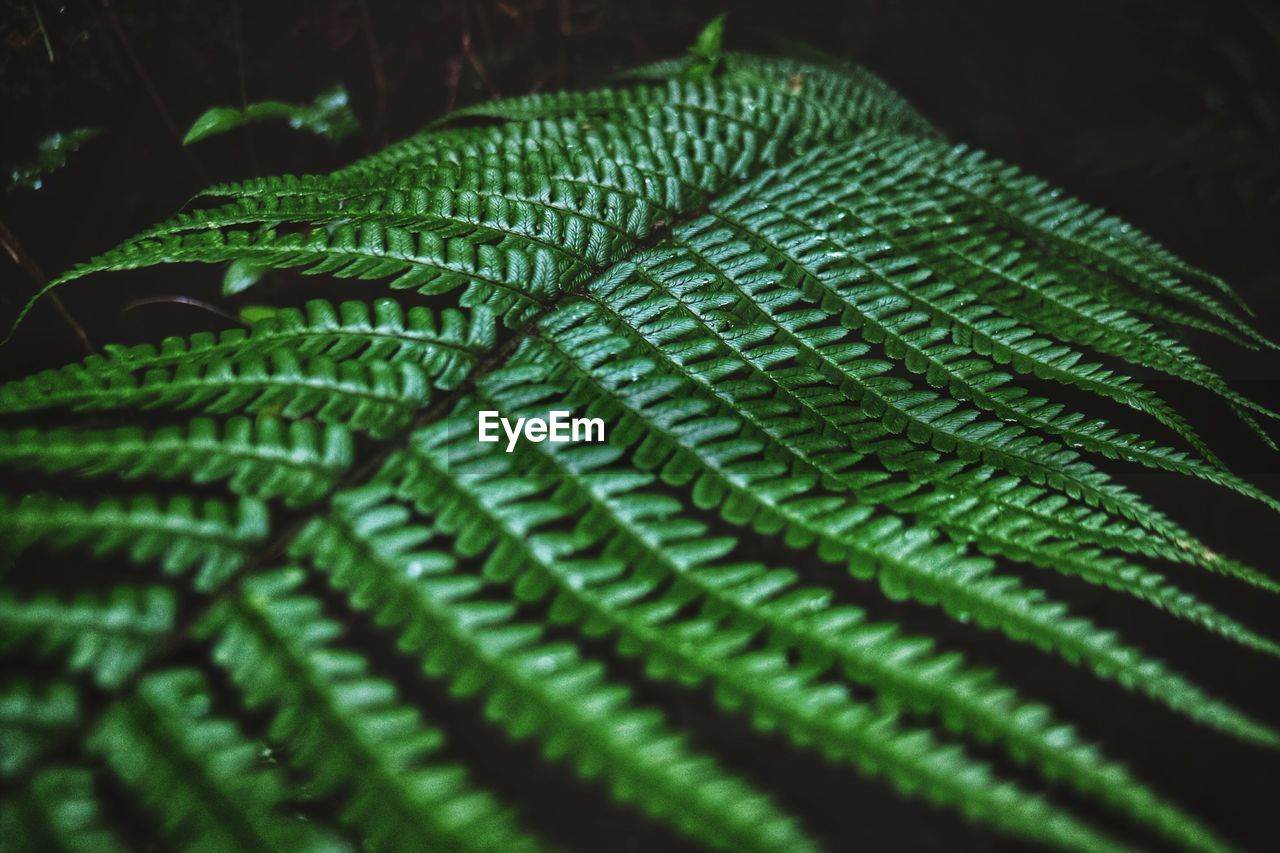 green color, close-up, leaf, plant part, pattern, no people, selective focus, fern, full frame, backgrounds, nature, growth, plant, natural pattern, beauty in nature, indoors, textured, day, focus on foreground, textile, black background, jeans