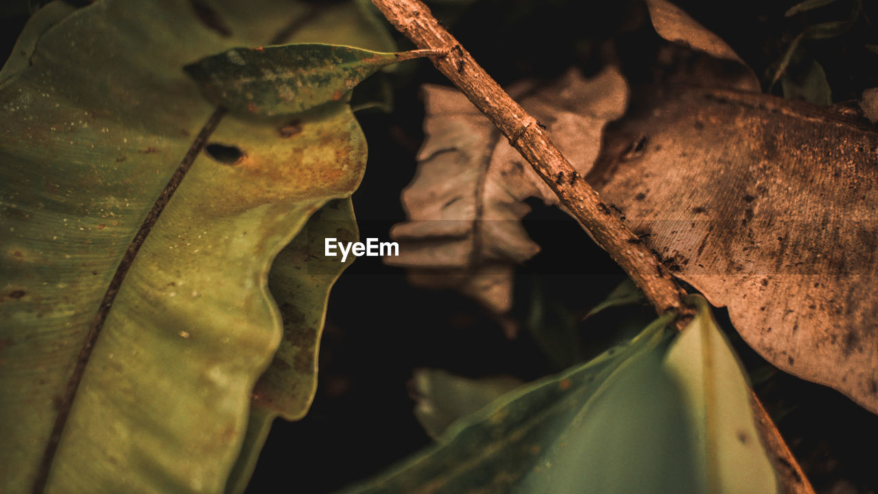 leaf, plant part, plant, close-up, no people, nature, selective focus, dry, day, leaves, beauty in nature, outdoors, growth, tranquility, focus on foreground, tree, leaf vein, vulnerability, autumn, fragility