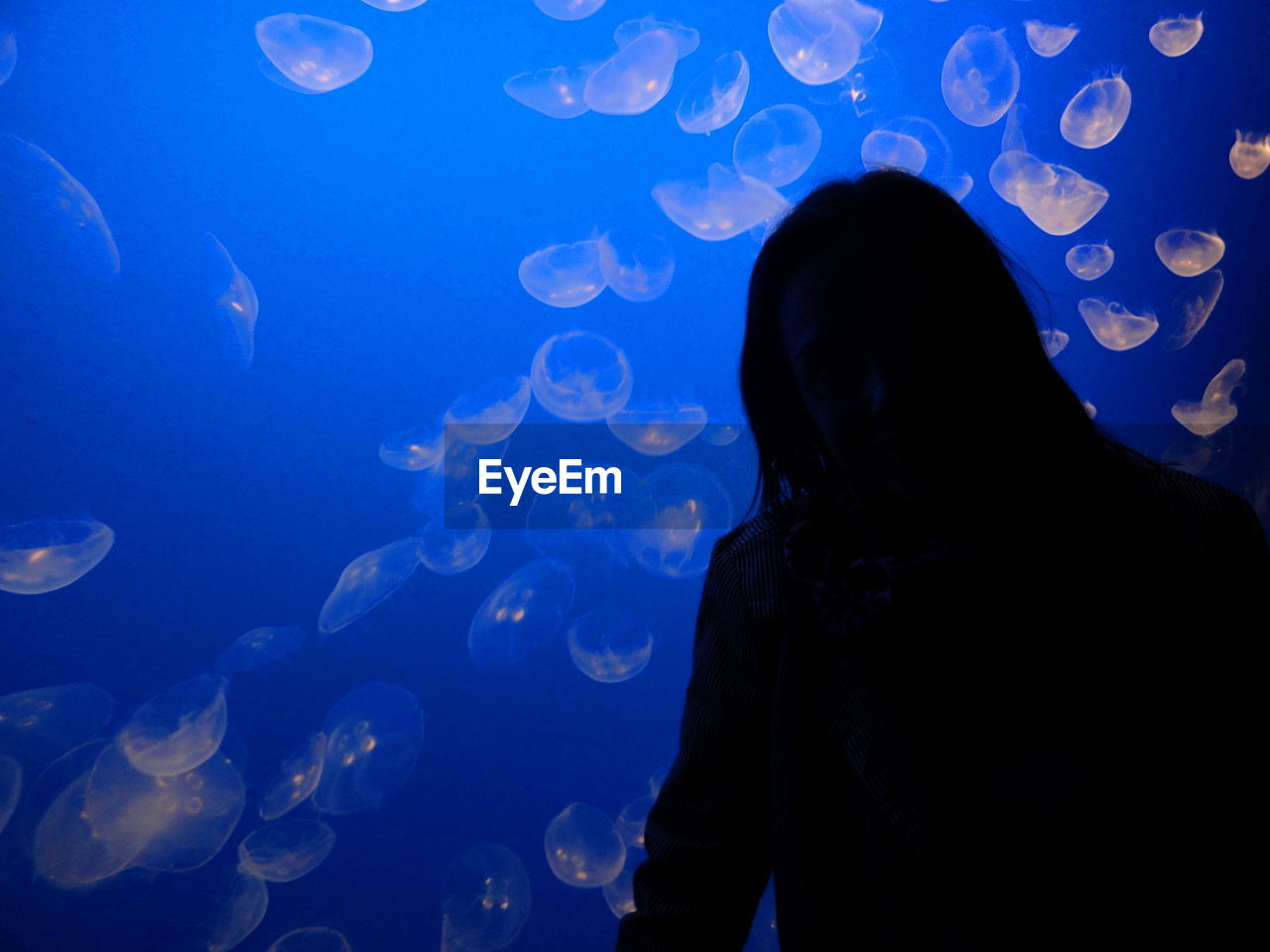 Silhouette Man Standing Against Jellyfishes In Fish Tank At Aquarium
