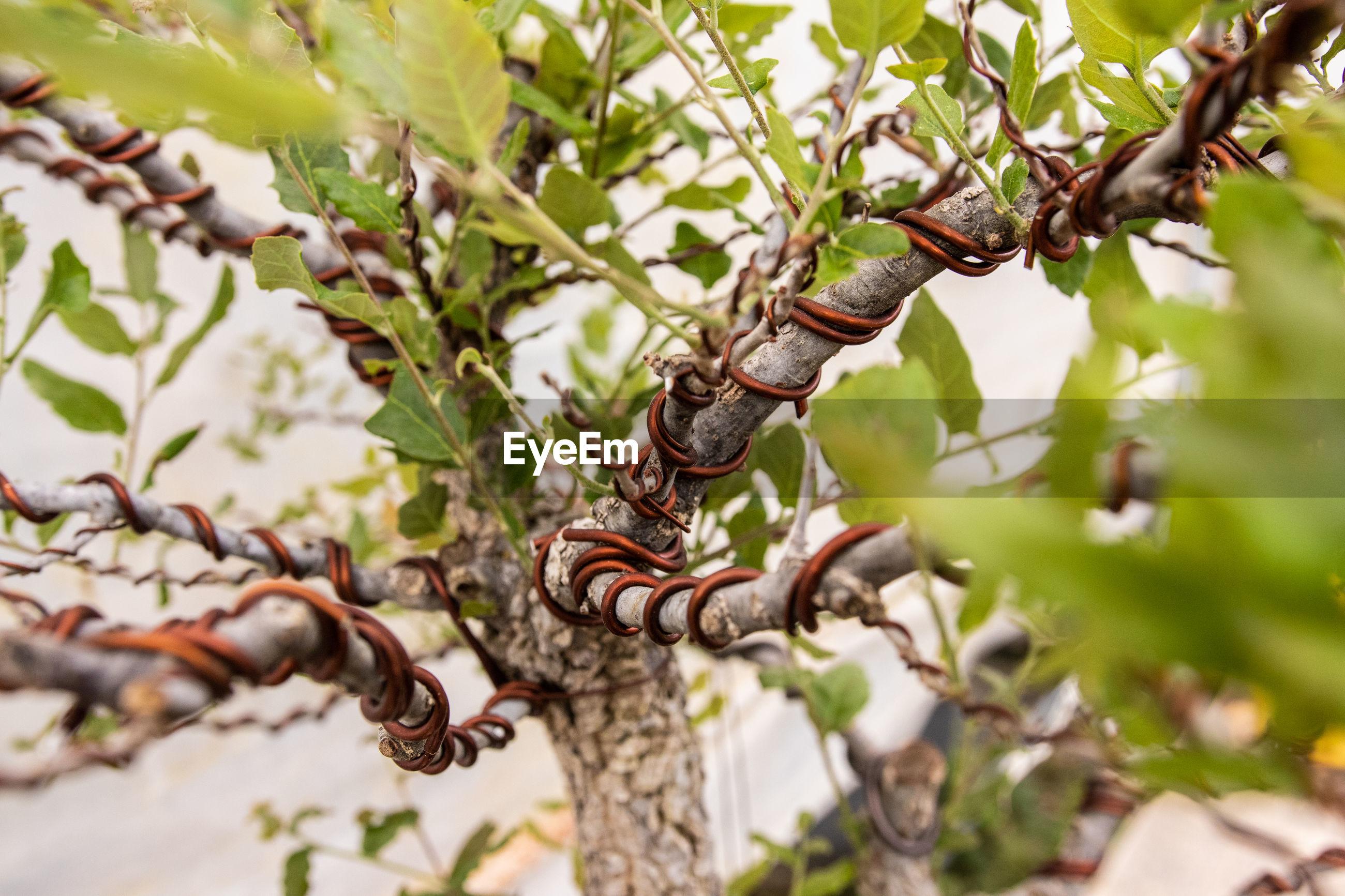 Close-up of plant stem