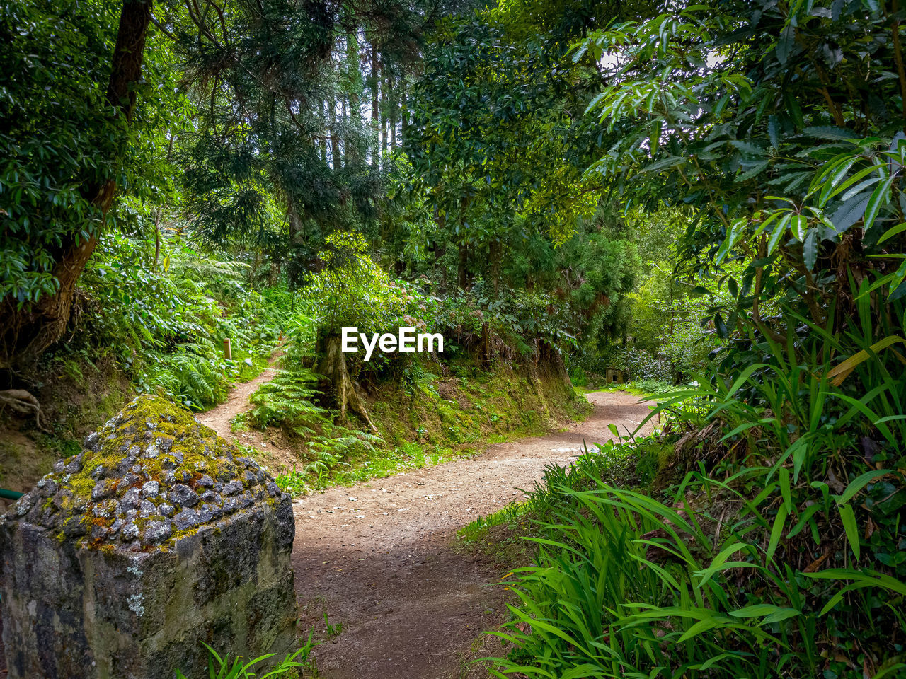 plant, tree, footpath, green color, direction, forest, tranquility, nature, beauty in nature, tranquil scene, growth, no people, the way forward, day, land, non-urban scene, scenics - nature, lush foliage, road, foliage, outdoors, woodland, garden path, flowerbed, ornamental garden