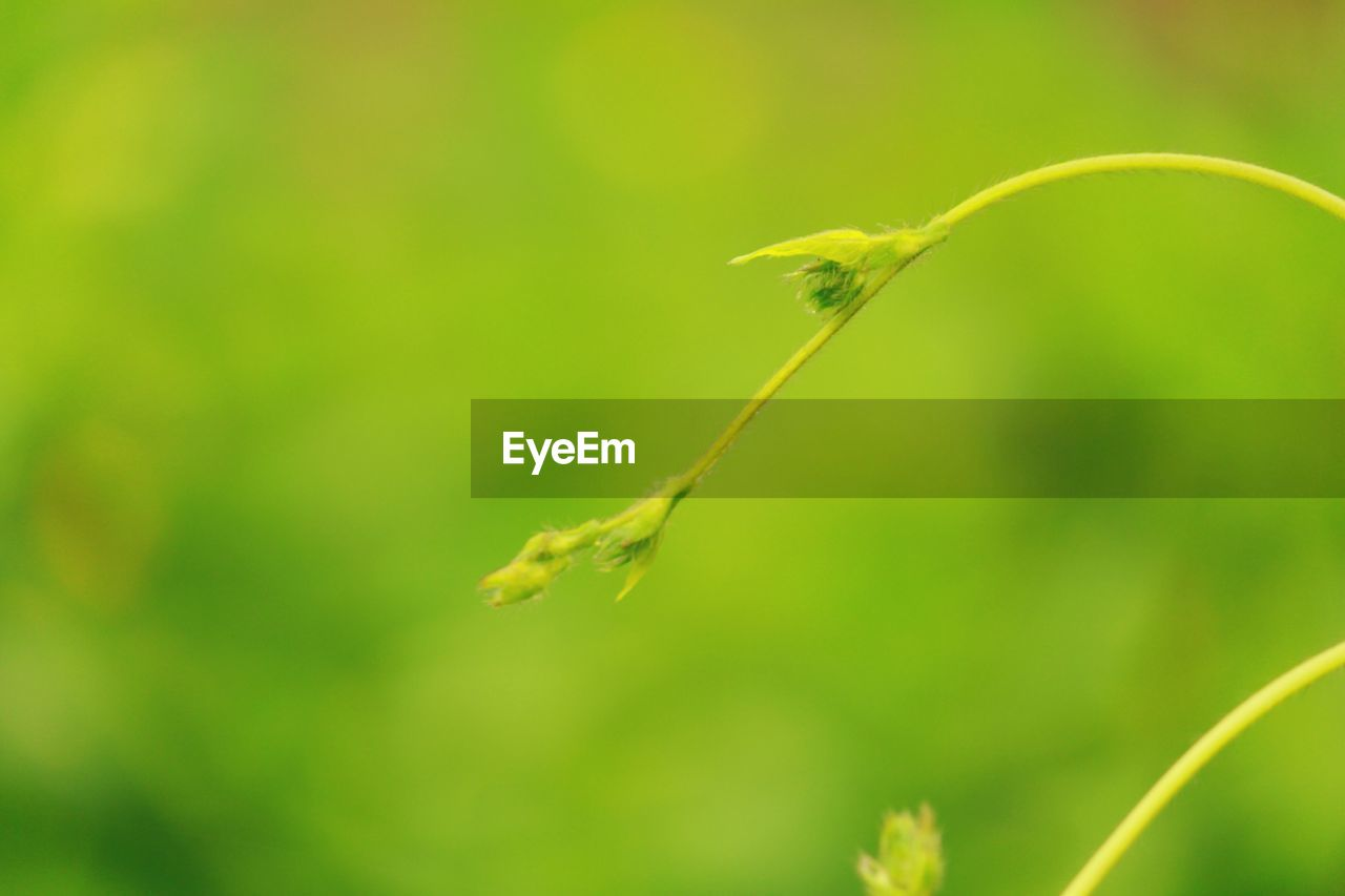 growth, nature, plant, green color, beauty in nature, outdoors, no people, close-up, fragility, day, freshness