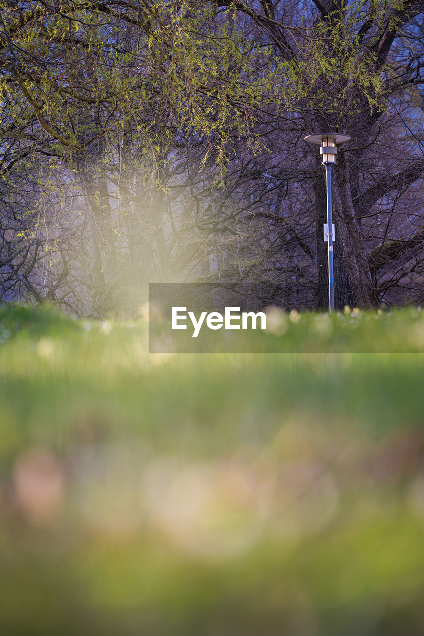 plant, tree, nature, growth, land, beauty in nature, selective focus, grass, no people, day, outdoors, flower, field, branch, flowering plant, tranquility, sunlight, tranquil scene, green color, focus on background, springtime, cherry blossom
