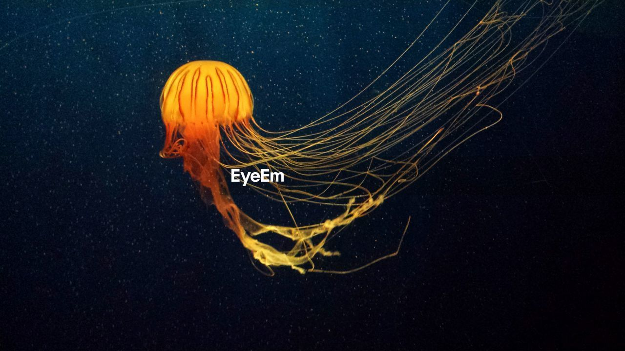 Close-Up Of Illuminated Jellyfish