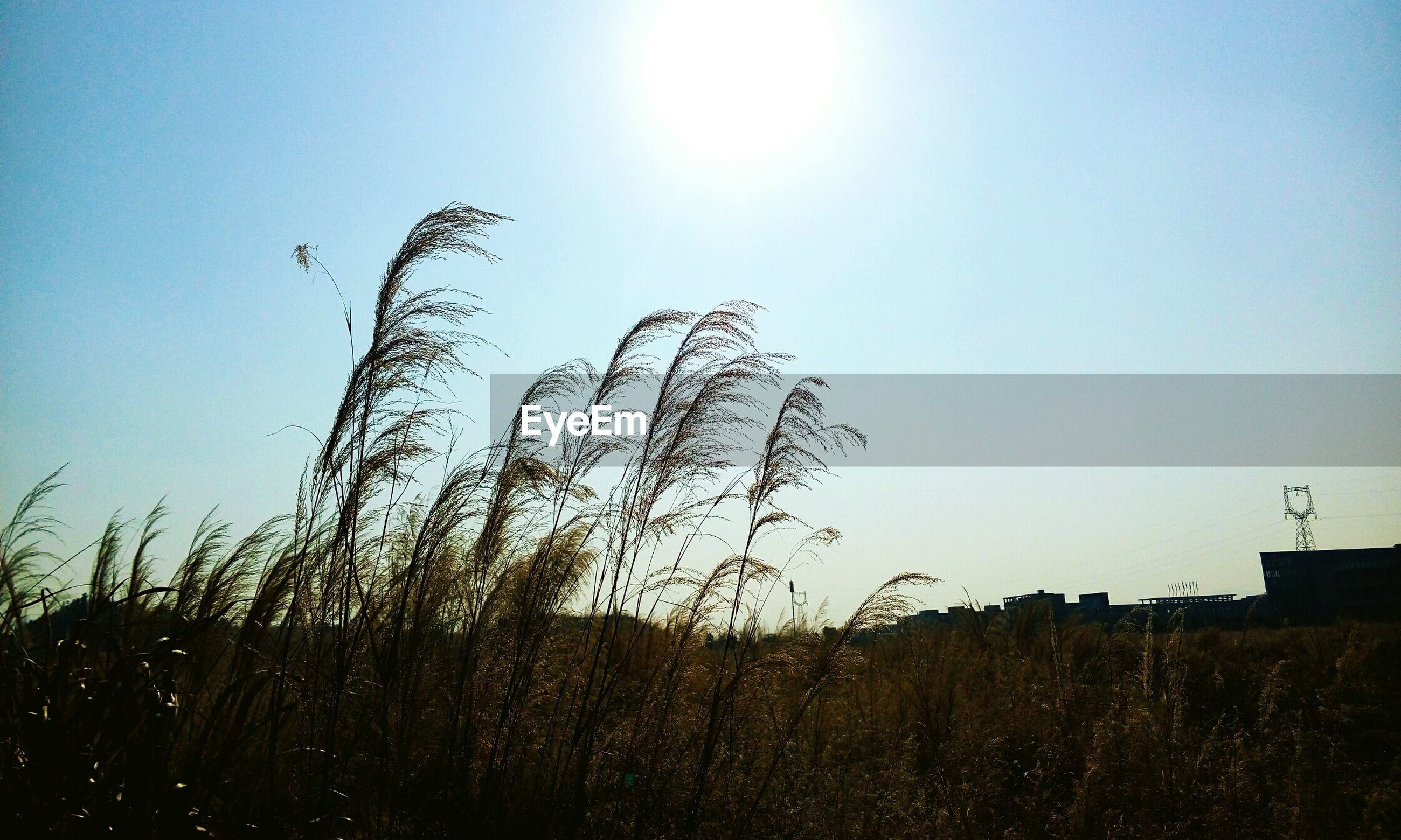 nature, sun, growth, sunlight, sky, silhouette, clear sky, sunset, no people, beauty in nature, outdoors, tranquility, scenics, low angle view, tranquil scene, day, sunbeam