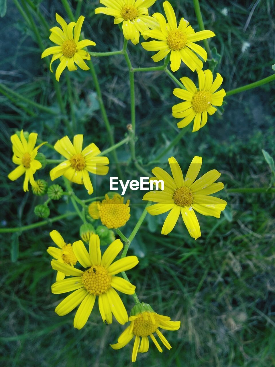 flower, yellow, growth, nature, beauty in nature, fragility, plant, petal, freshness, flower head, field, blooming, outdoors, no people, day, close-up