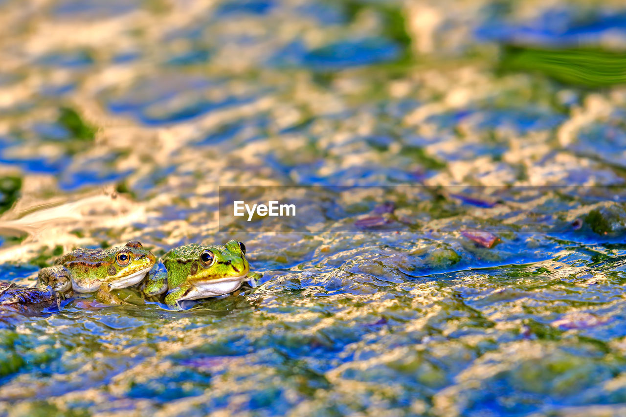 selective focus, close-up, day, no people, nature, outdoors, animal themes, animals in the wild, one animal, blue, water