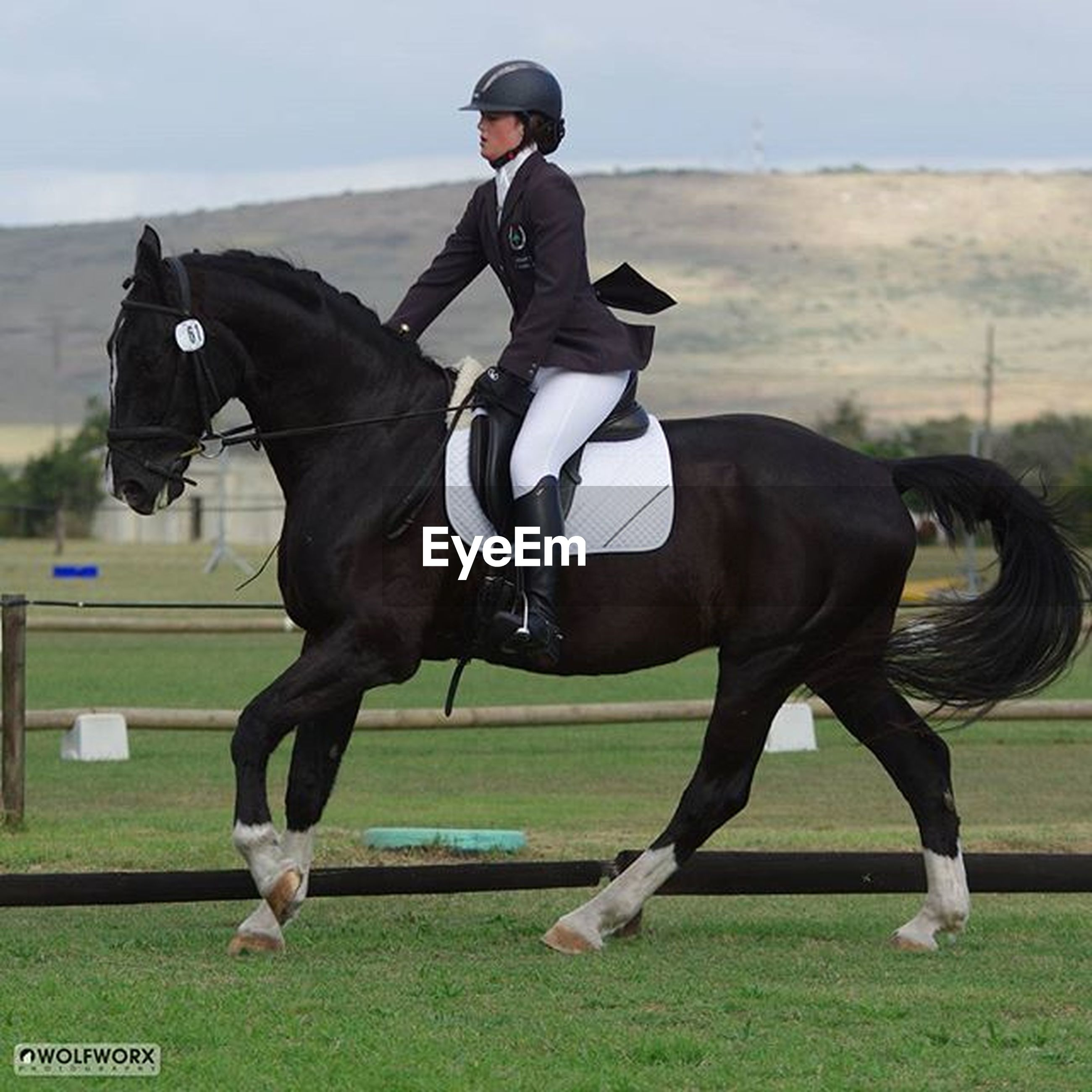horse, full length, lifestyles, men, sport, animal themes, leisure activity, one animal, motion, side view, domestic animals, riding, mid-air, sky, field, grass, transportation, outdoors