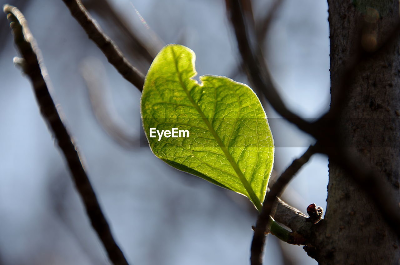 leaf, close-up, nature, focus on foreground, day, green color, no people, growth, branch, outdoors, fragility, beauty in nature, freshness, water, tree