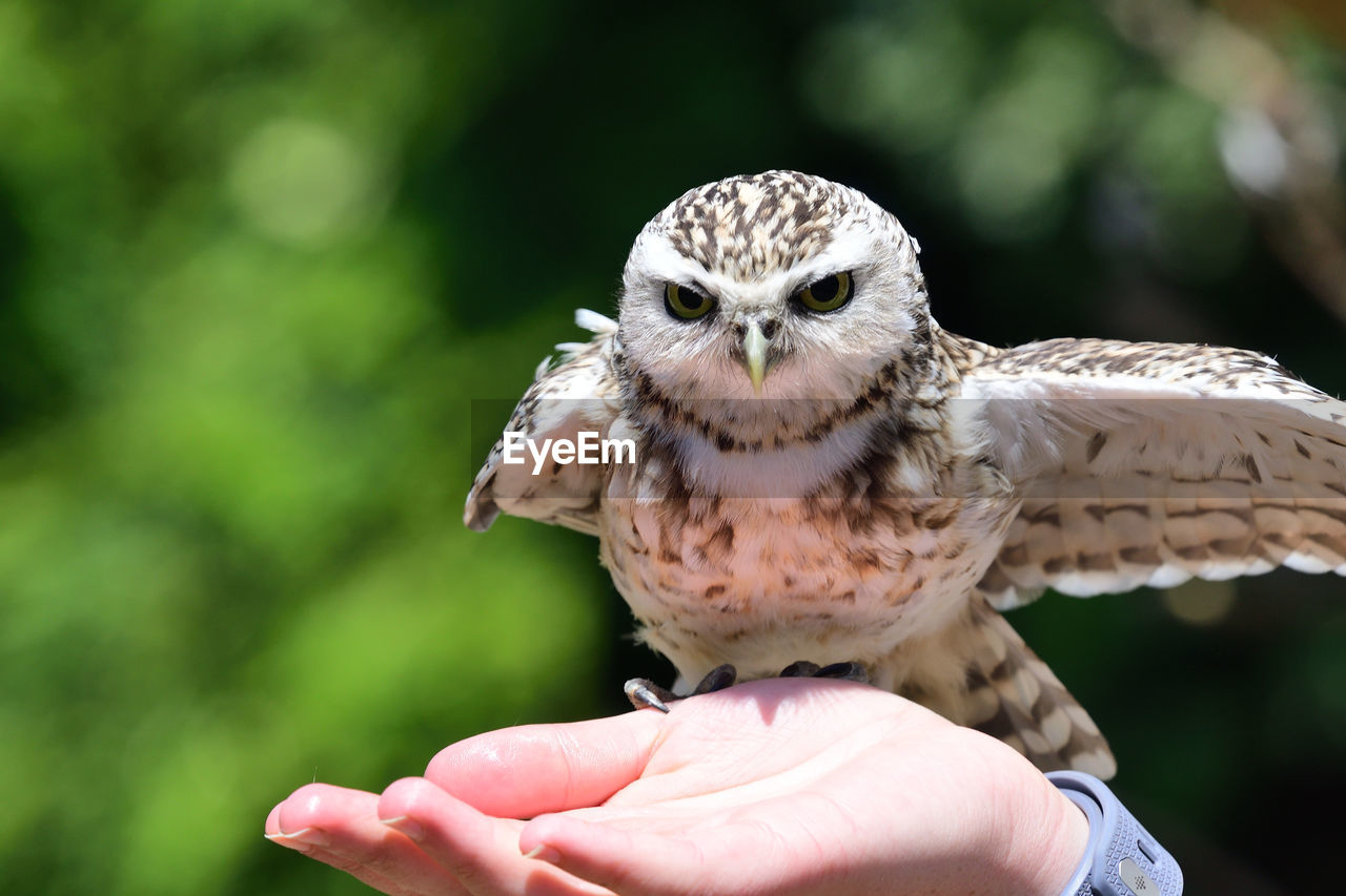 Cropped Hand Holding Owl