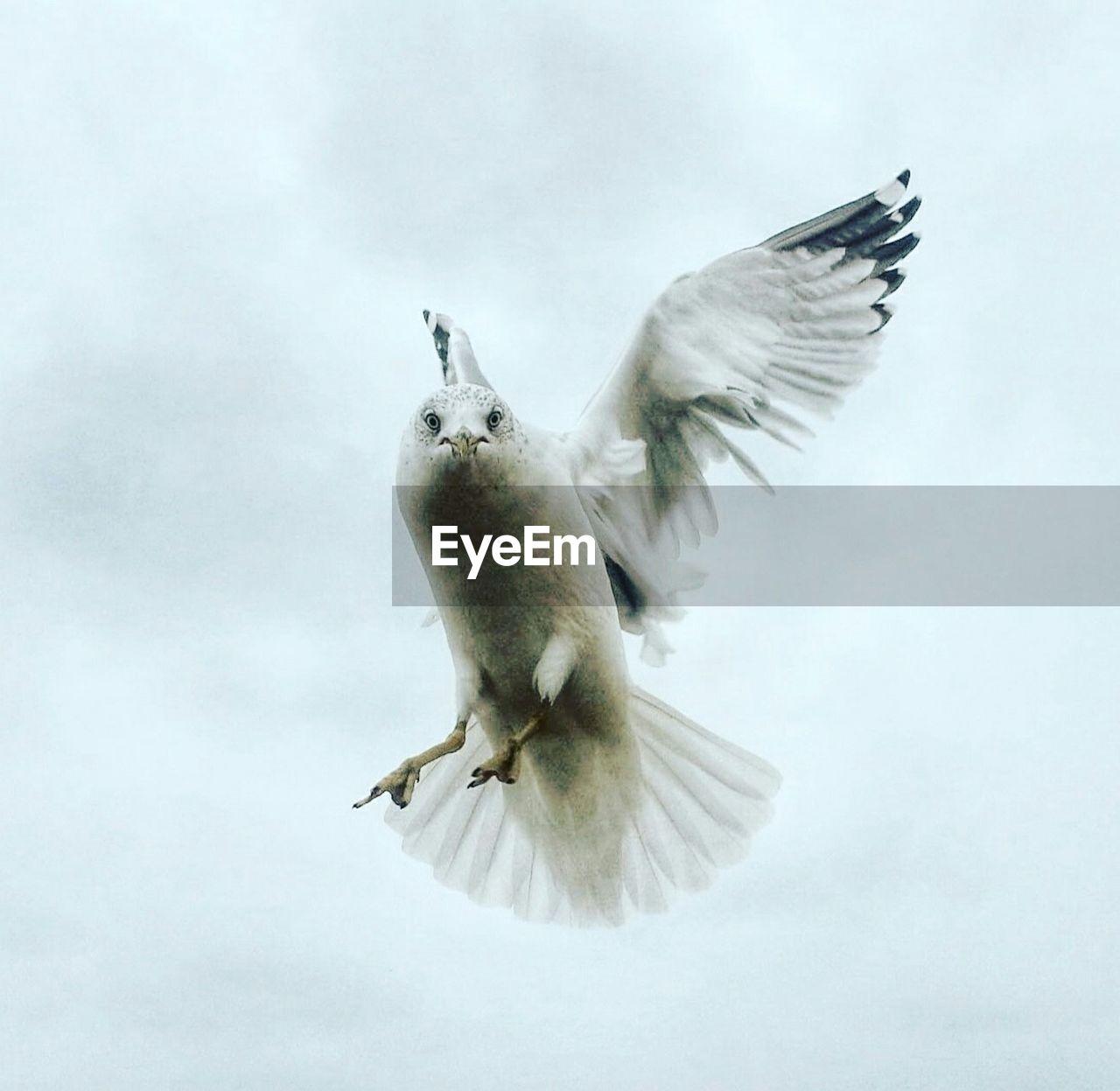 Bird Flying Against Sky
