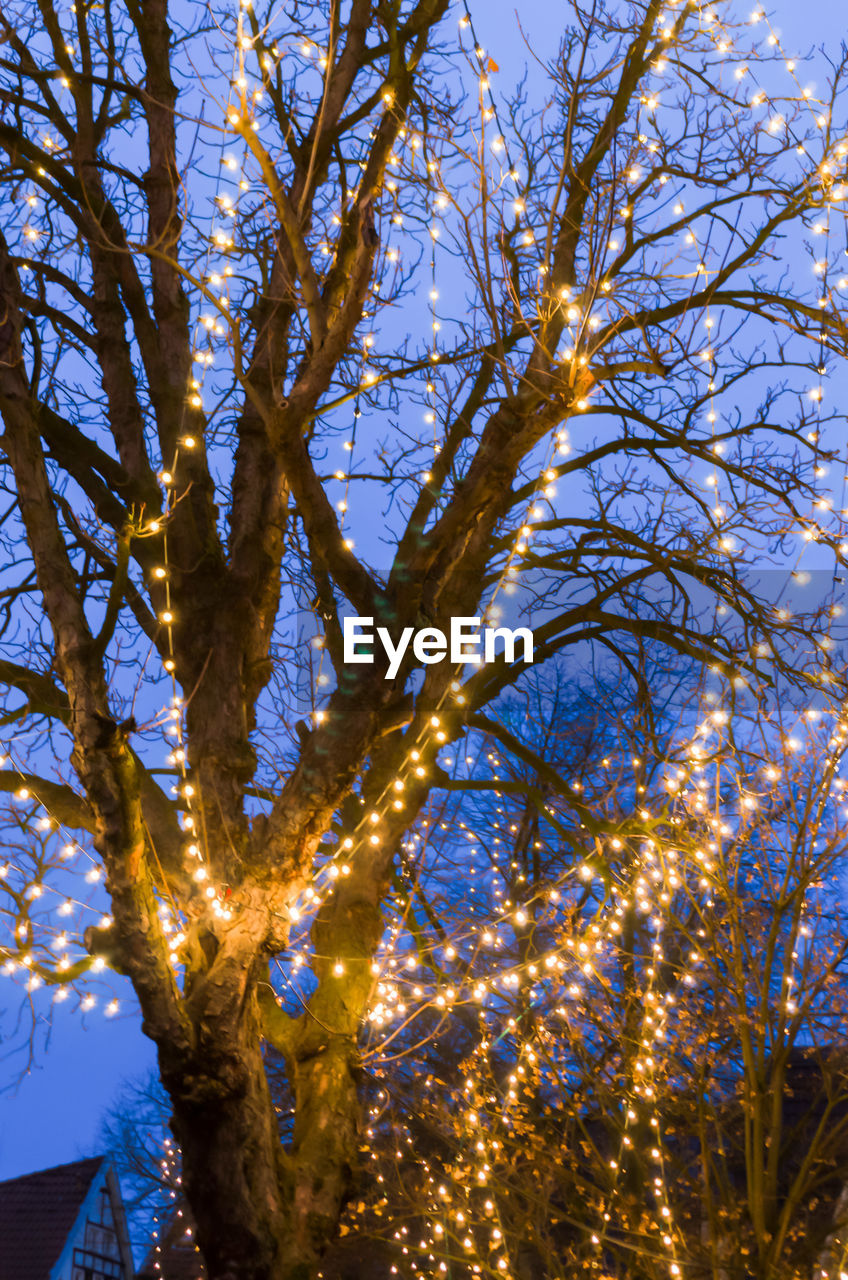 tree, branch, low angle view, no people, growth, nature, outdoors, beauty in nature, day, sky, illuminated, close-up