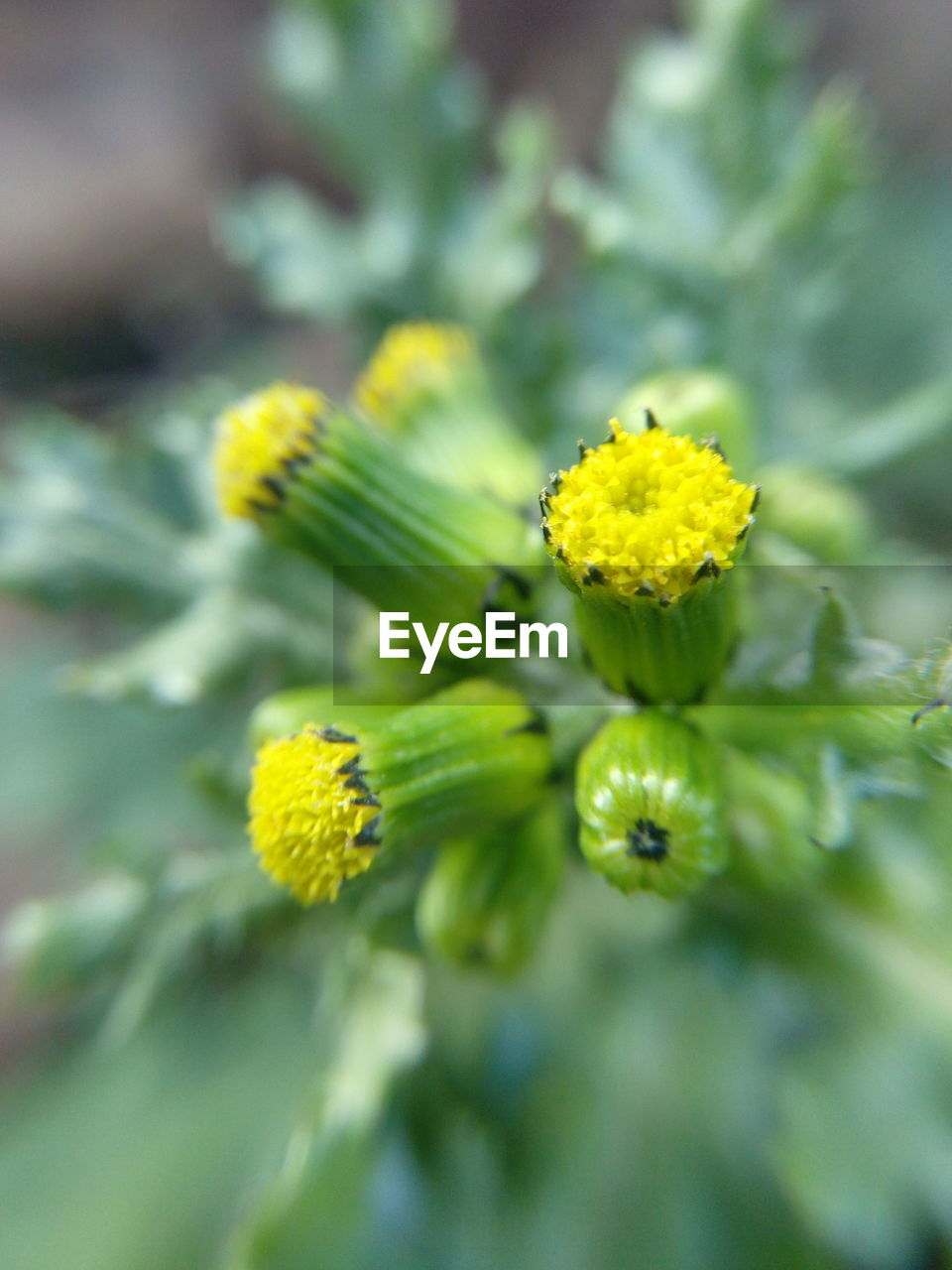 flower, yellow, growth, nature, fragility, plant, beauty in nature, outdoors, close-up, freshness, no people, day, flower head