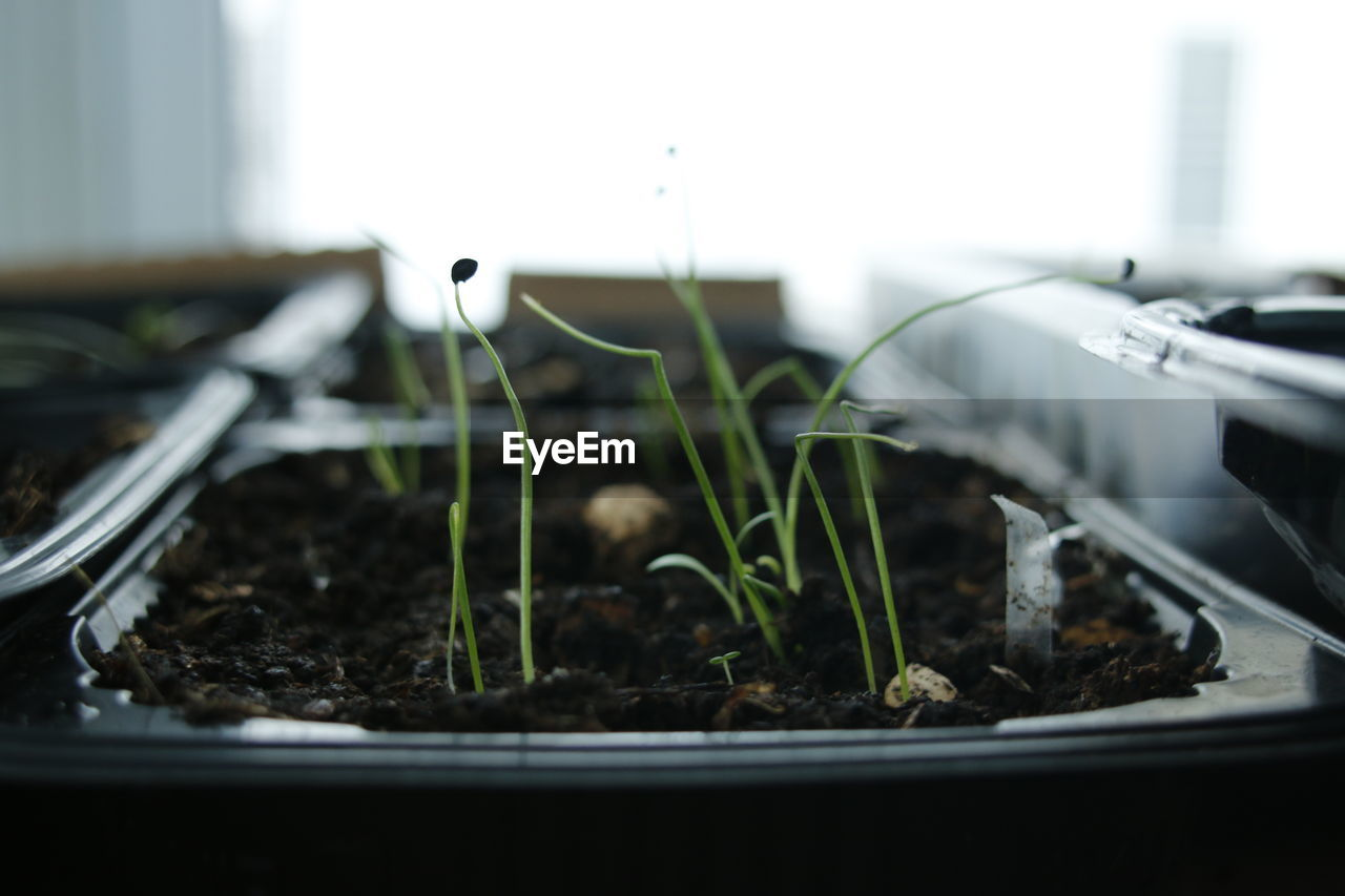 growth, close-up, plant, seedling, no people, nature, selective focus, green color, freshness, beginnings, new life, indoors, dirt, day, leaf, vulnerability, beauty in nature, potted plant, plant part, fragility, mud, plant nursery