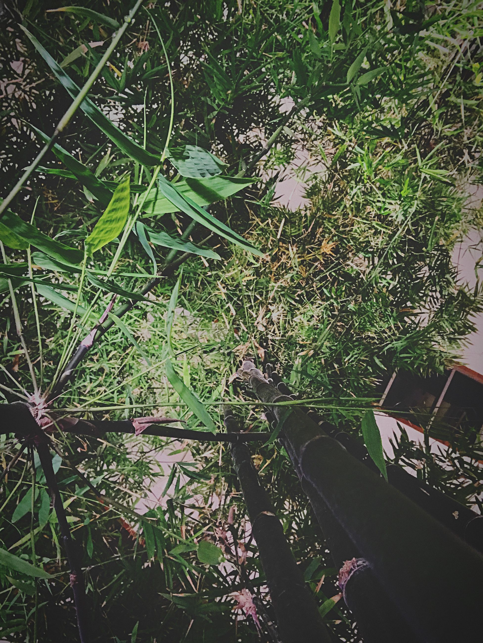 growth, plant, nature, grass, leaf, no people, high angle view, day, forest, vegetation, outdoors, green color, tree, beauty in nature