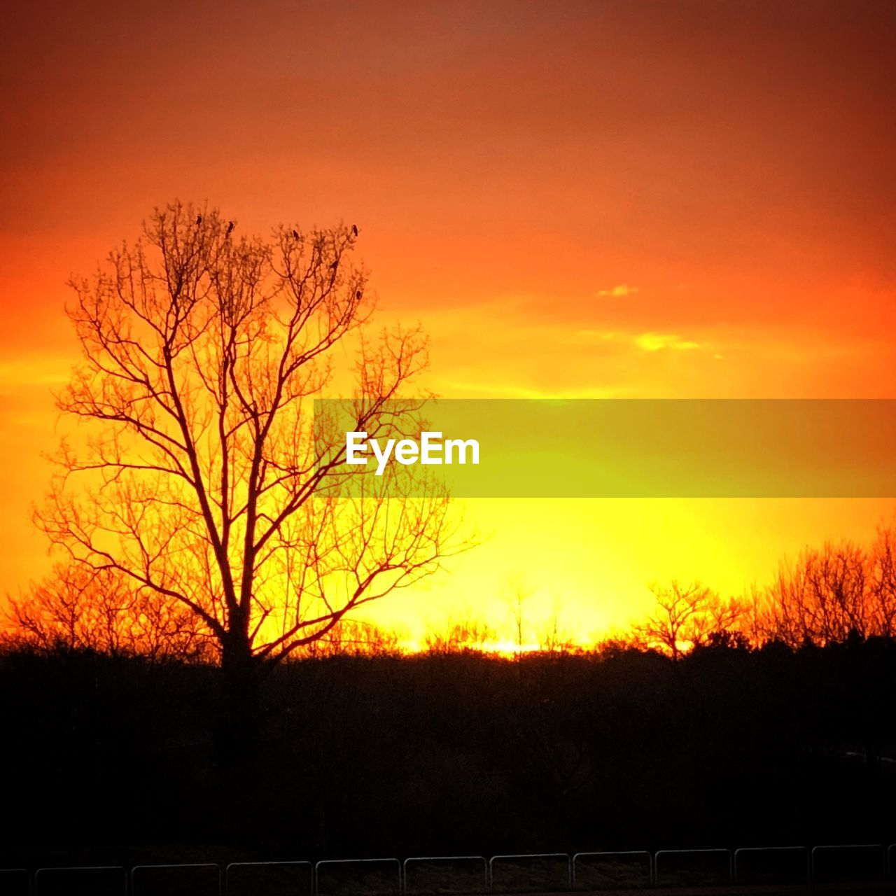 sunset, orange color, beauty in nature, nature, silhouette, tranquil scene, tree, tranquility, scenics, bare tree, outdoors, landscape, no people, sky, day